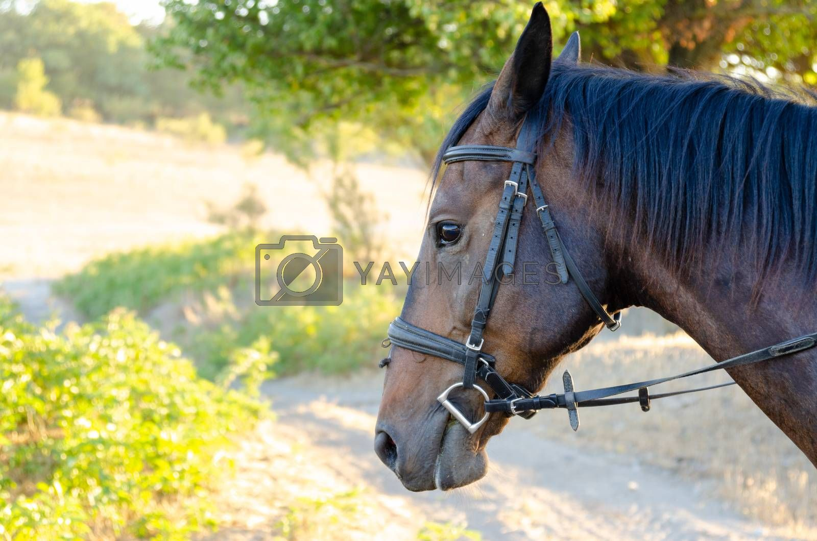 Horse portrait on a colorful forest background