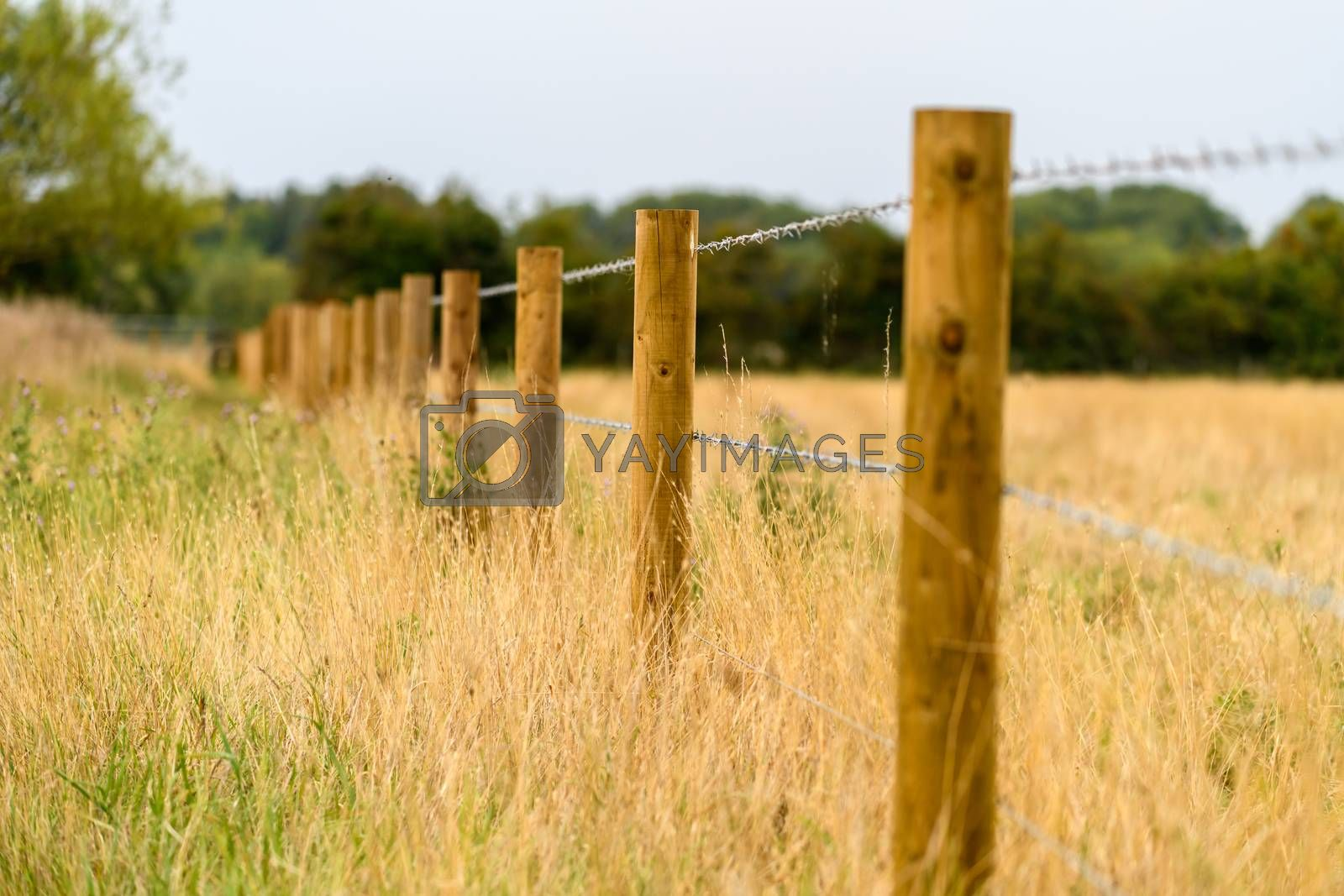 barbed wire fence in a meadow