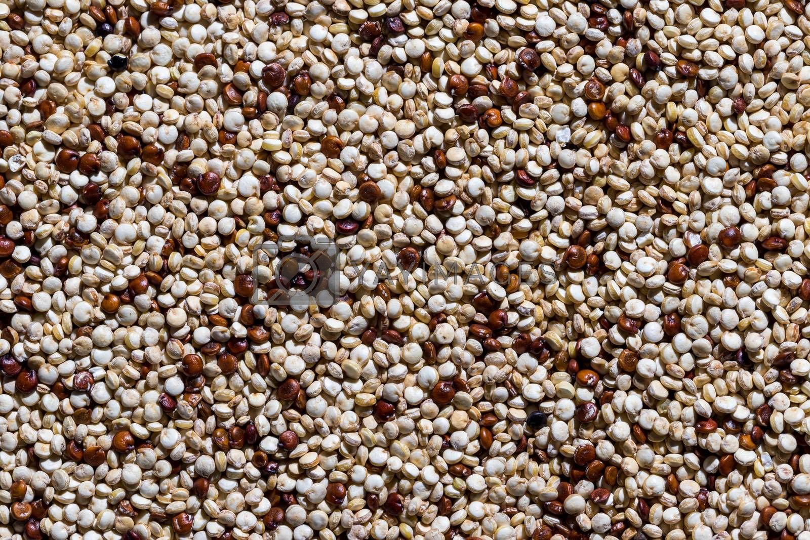 An overhead view of an uncooked mixture of red and white quinoa. Food texture.