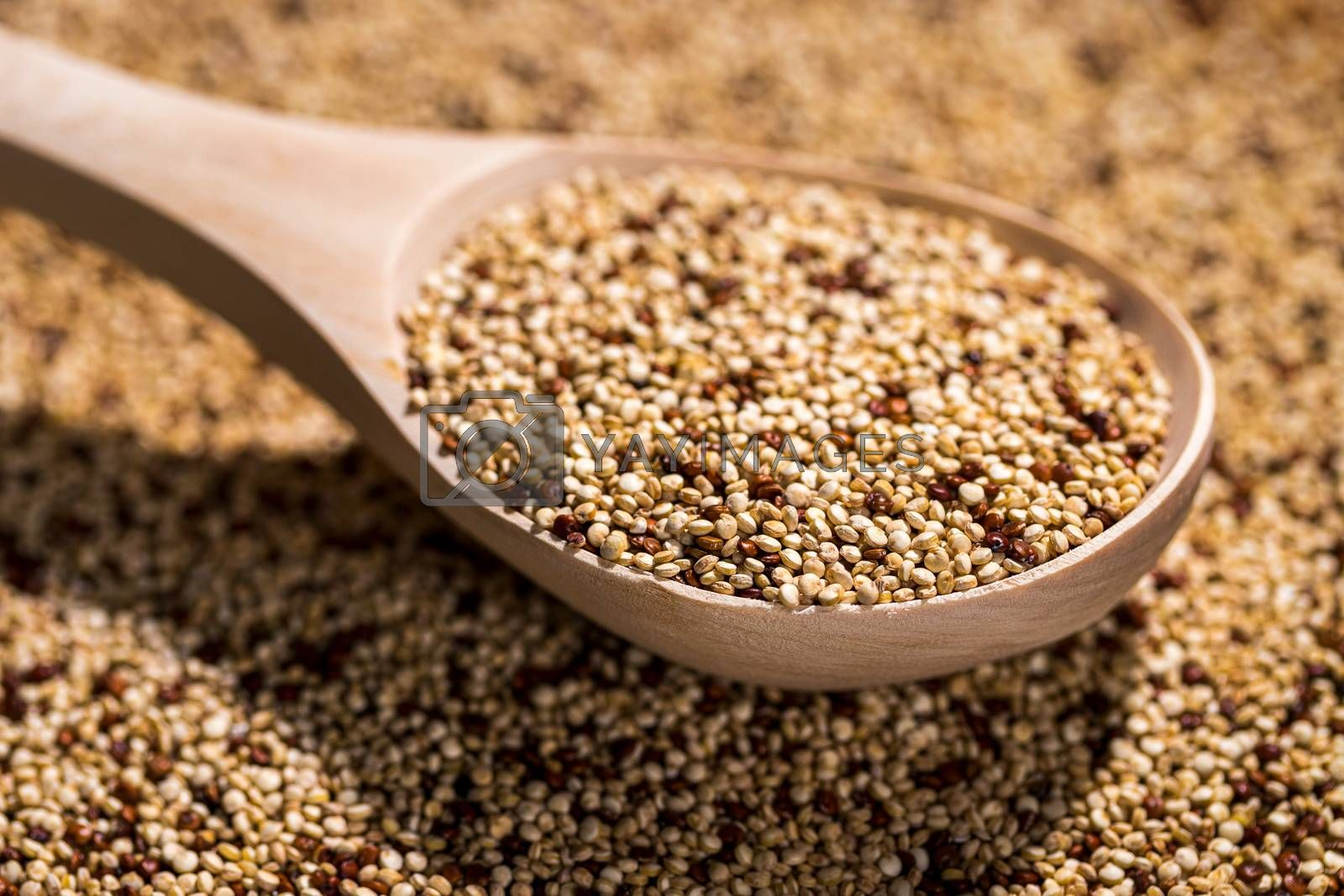 Wooden spoon with an uncooked mixture of red and white quinoa.