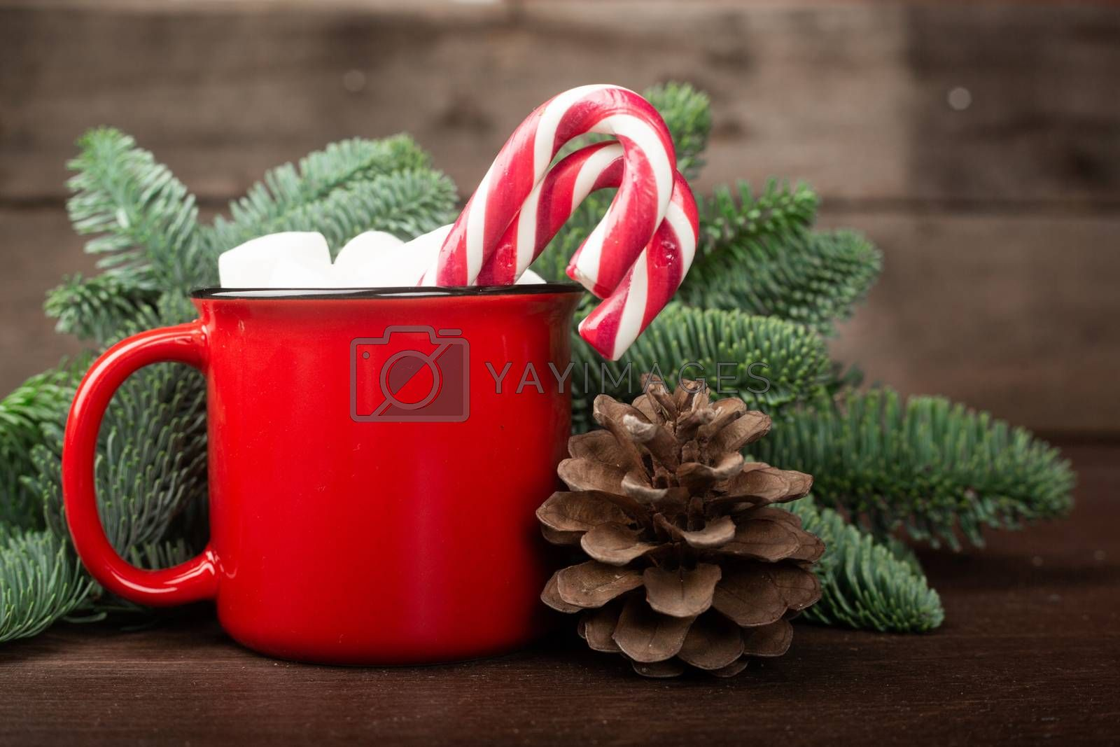 Cocoa in red mug with marshmallows and candy cane and Christmas fir tree on dark wooden background