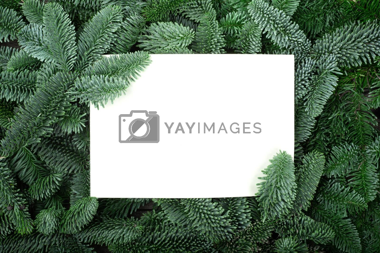 Christmas frame of natural fir tree branches with copy space for text isolated on white background of greeting card holiday celebration invitation