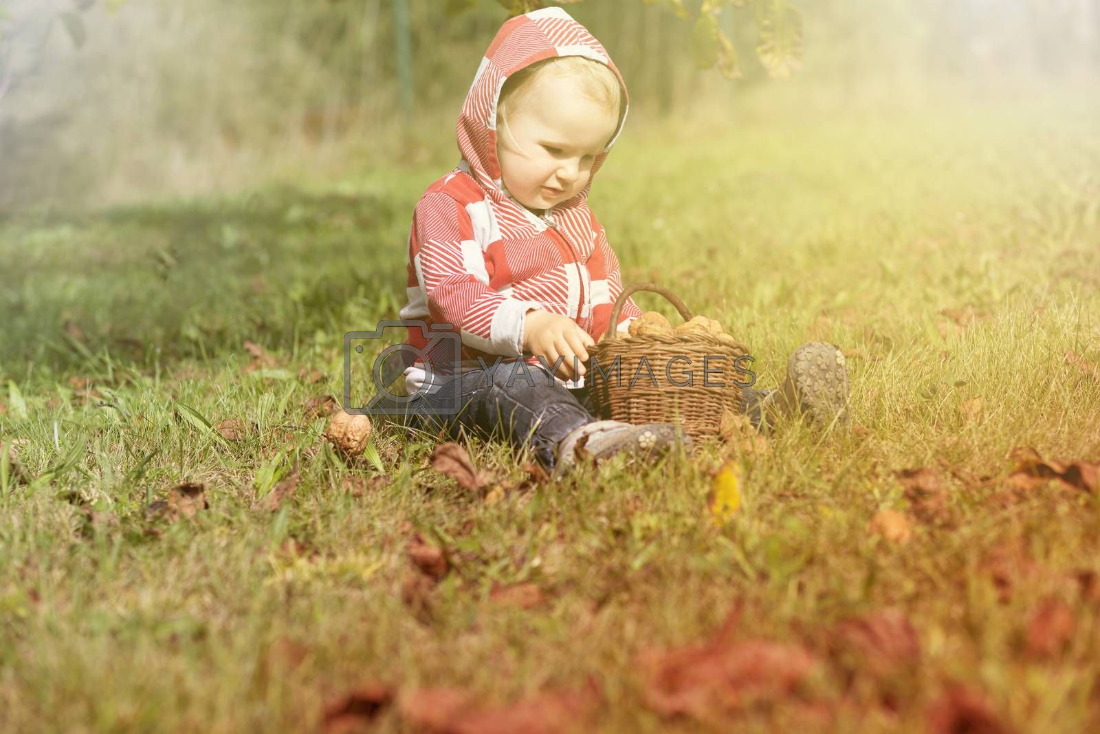 Portrait of cute baby boy sitting with handmade wicker basket full of walnuts. Photo in autumn colors design.