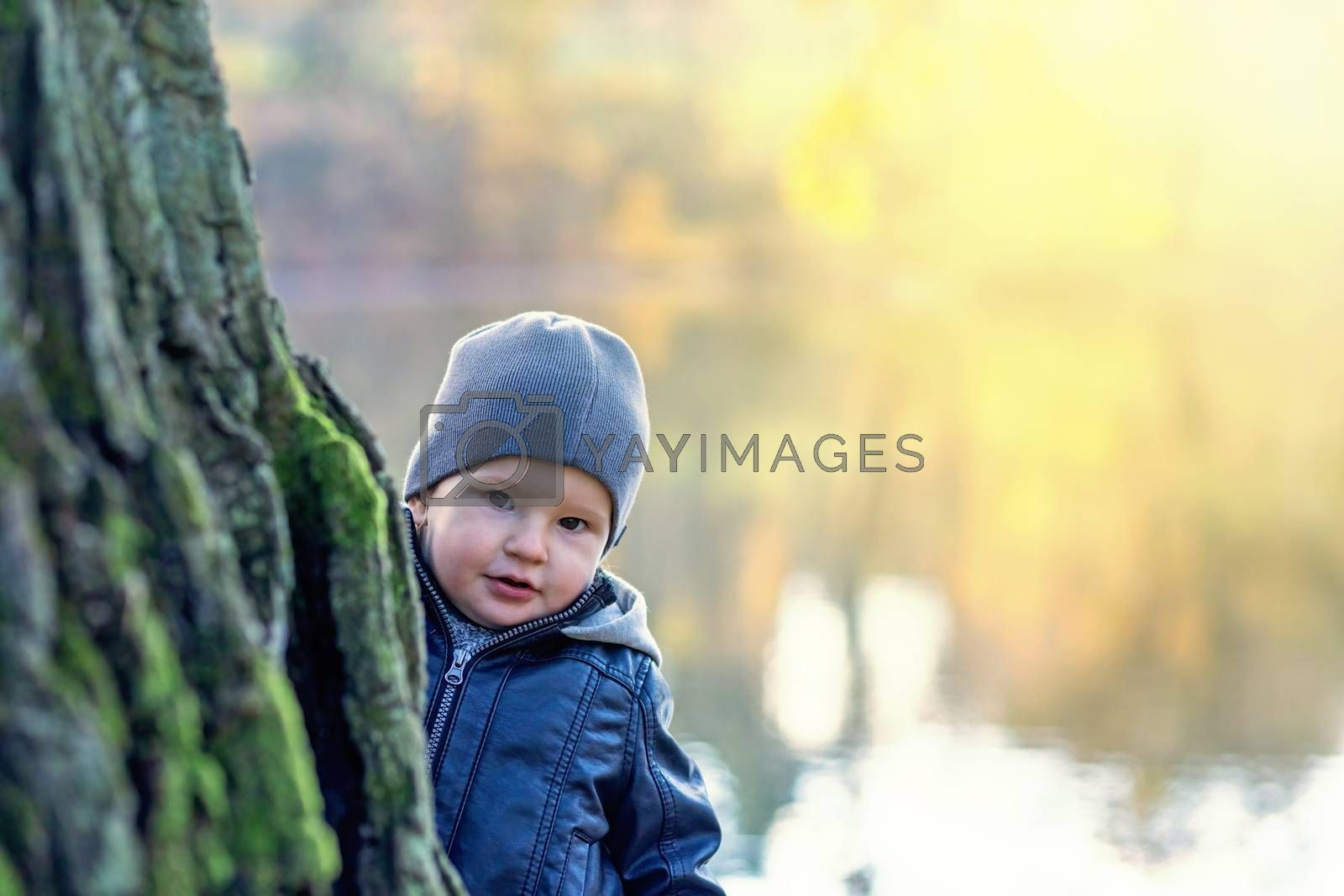 Adorable little boy is peeking out from behind a tree trunk on the shore of an autumn pond