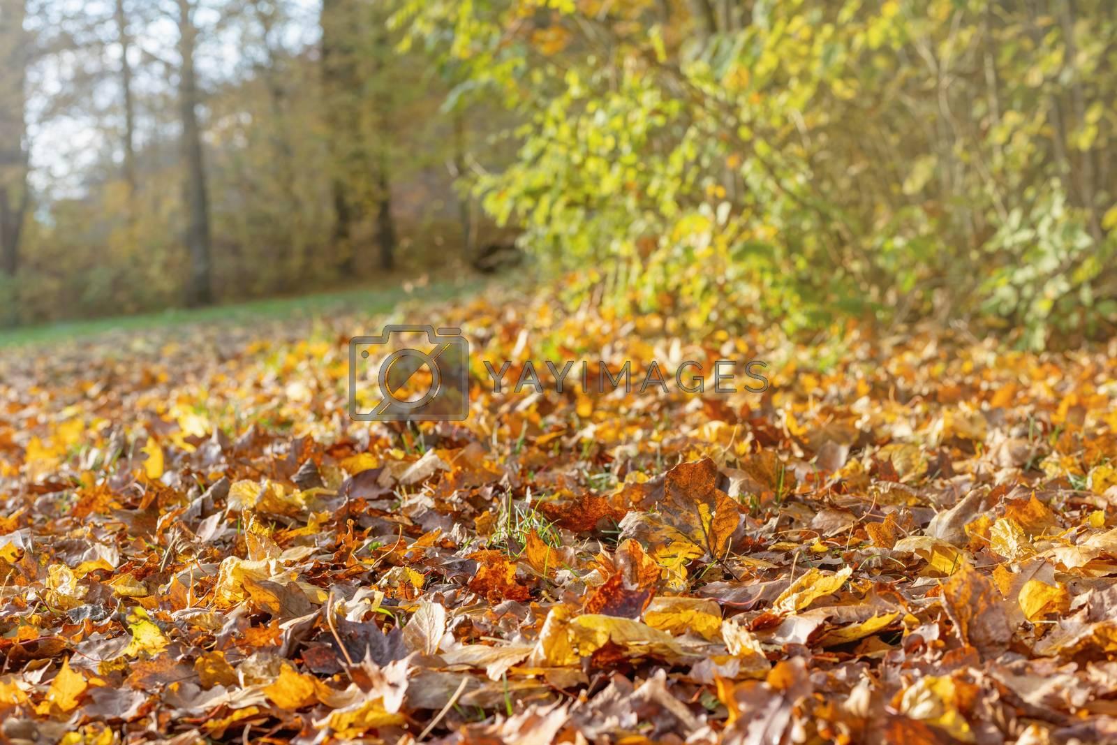Autumn fallen leaves background in sunlight. Horizontally.