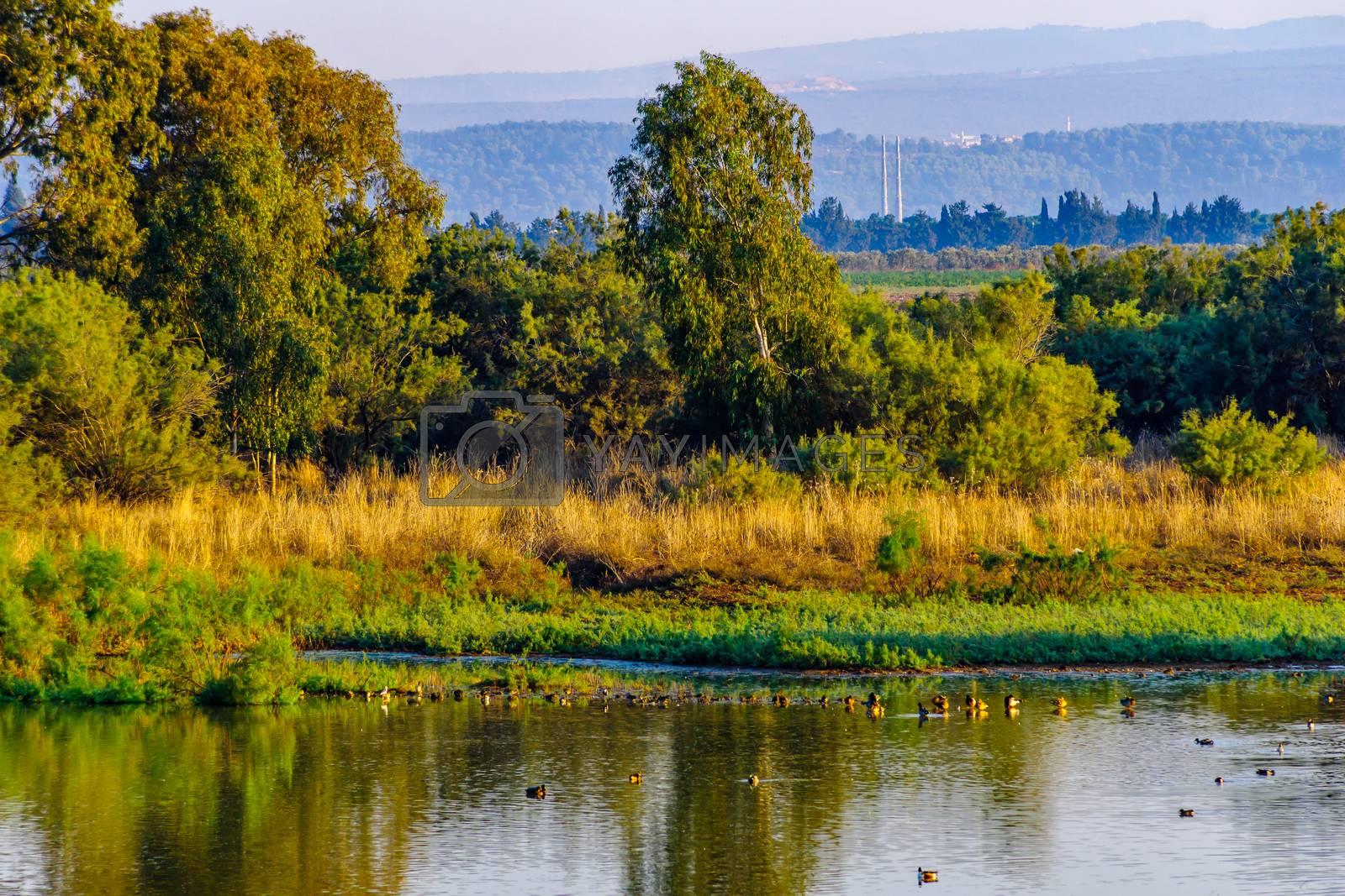 Morning view over wetland with various birds, in En Afek nature reserve, northern Israel