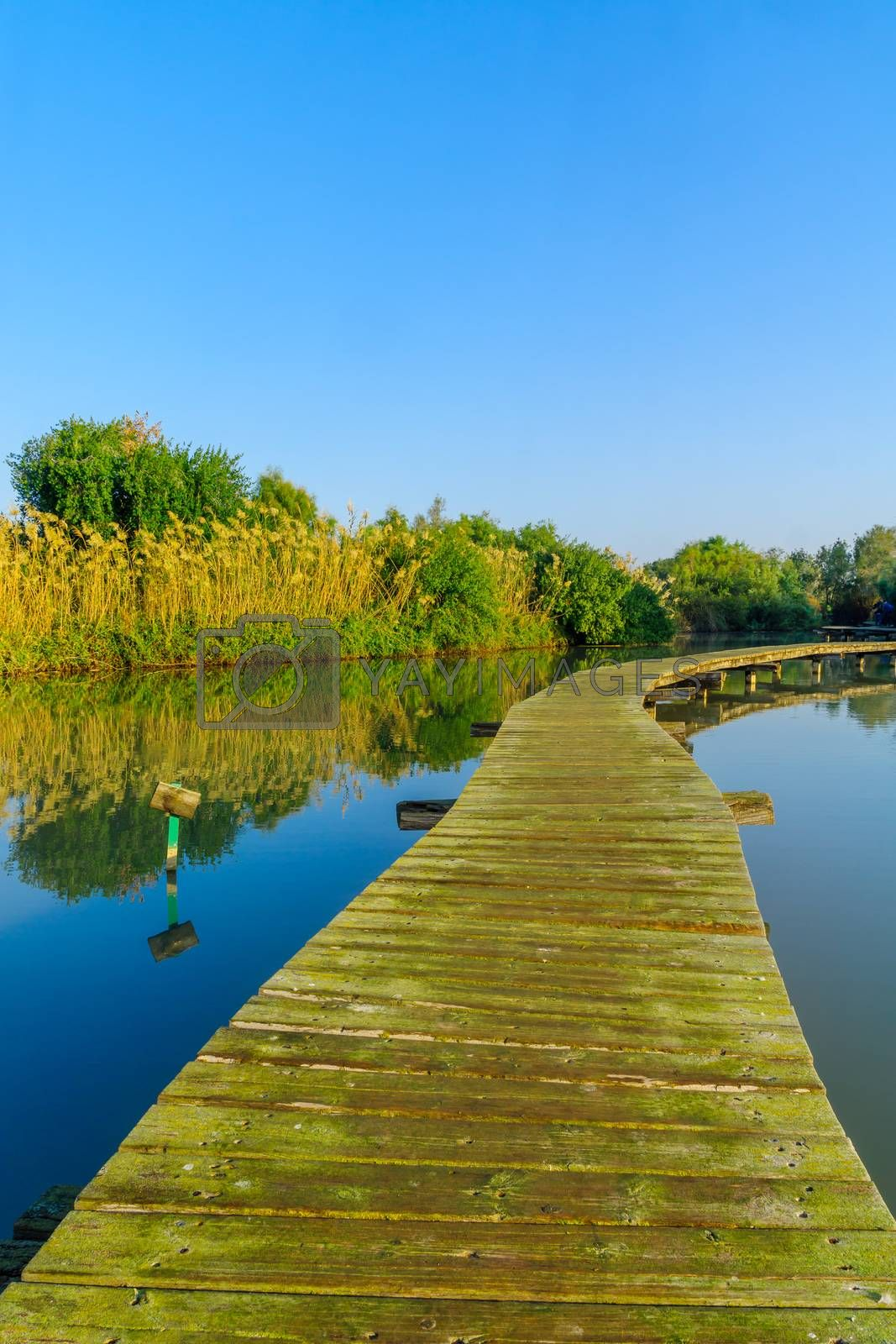 View of an elevated pathway over a pond, in En Afek nature reserve, northern Israel