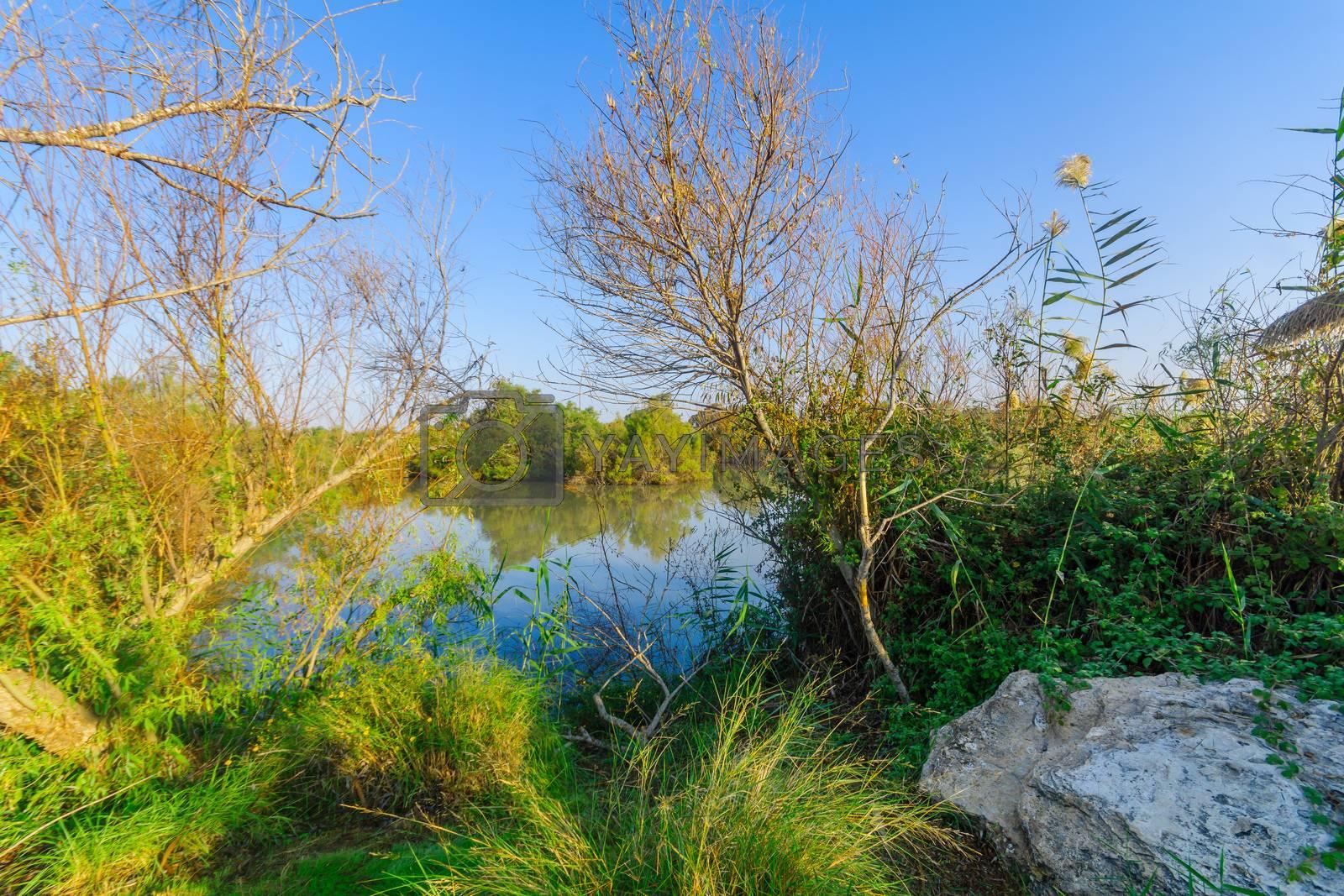 View of a pond, in En Afek nature reserve, northern Israel