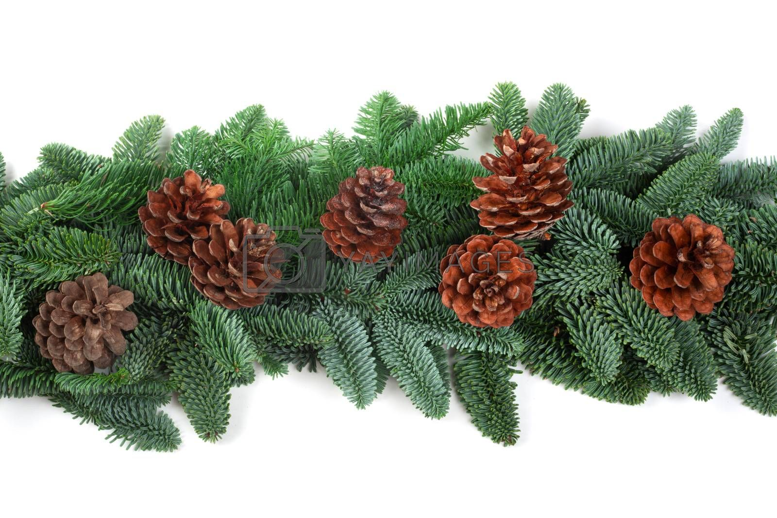 Royalty free image of Christmas border of fir tree on white by destillat