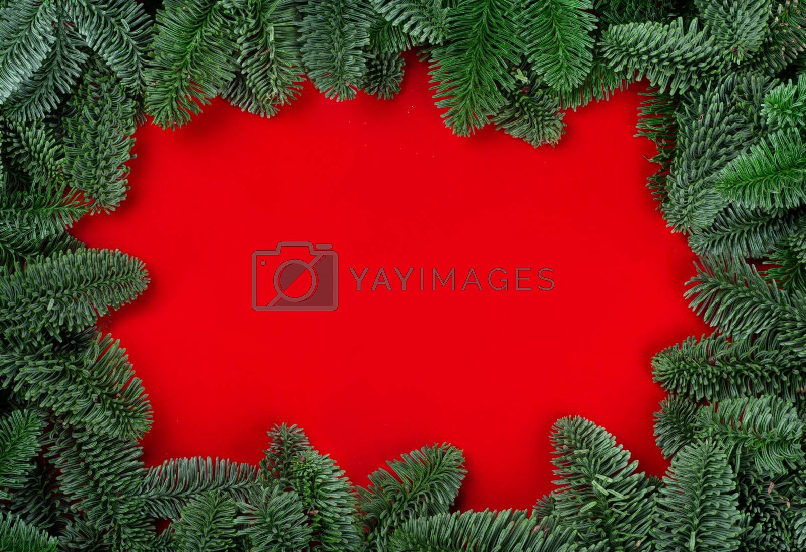 Royalty free image of Christmas fir tree on red by destillat