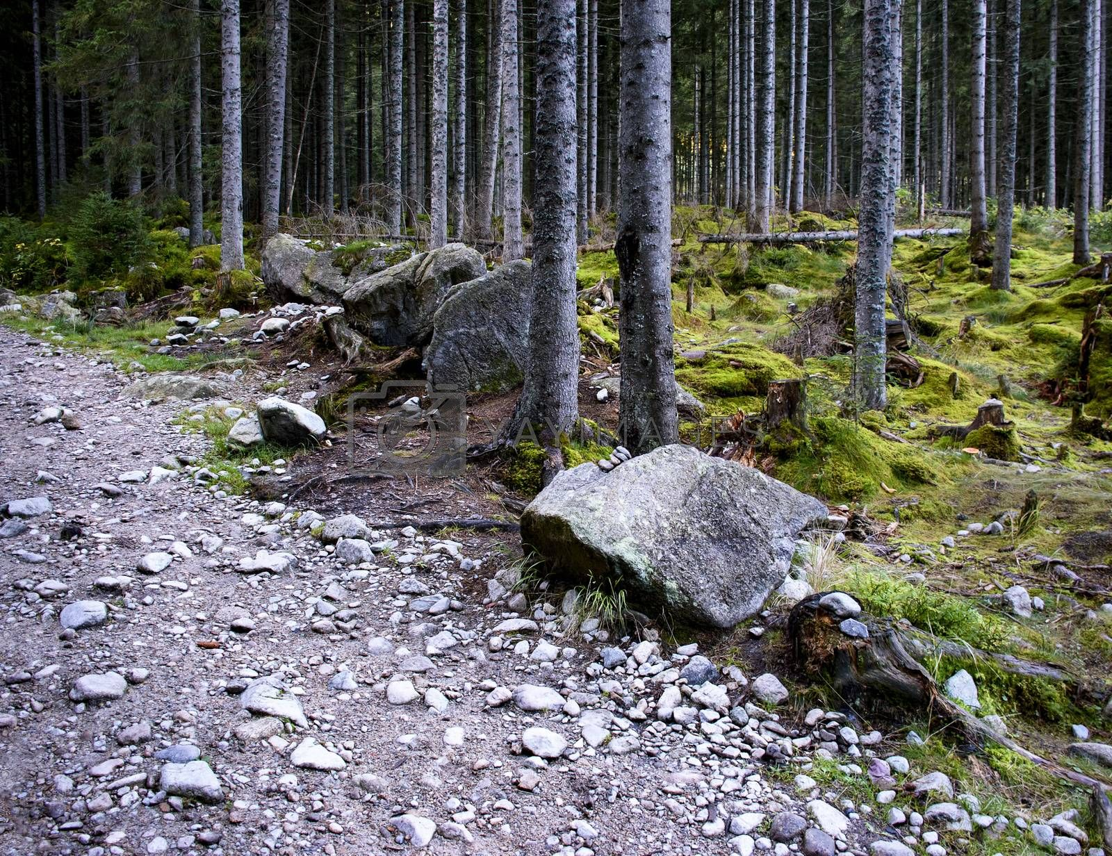 landscape background stone path at the edge of the forest