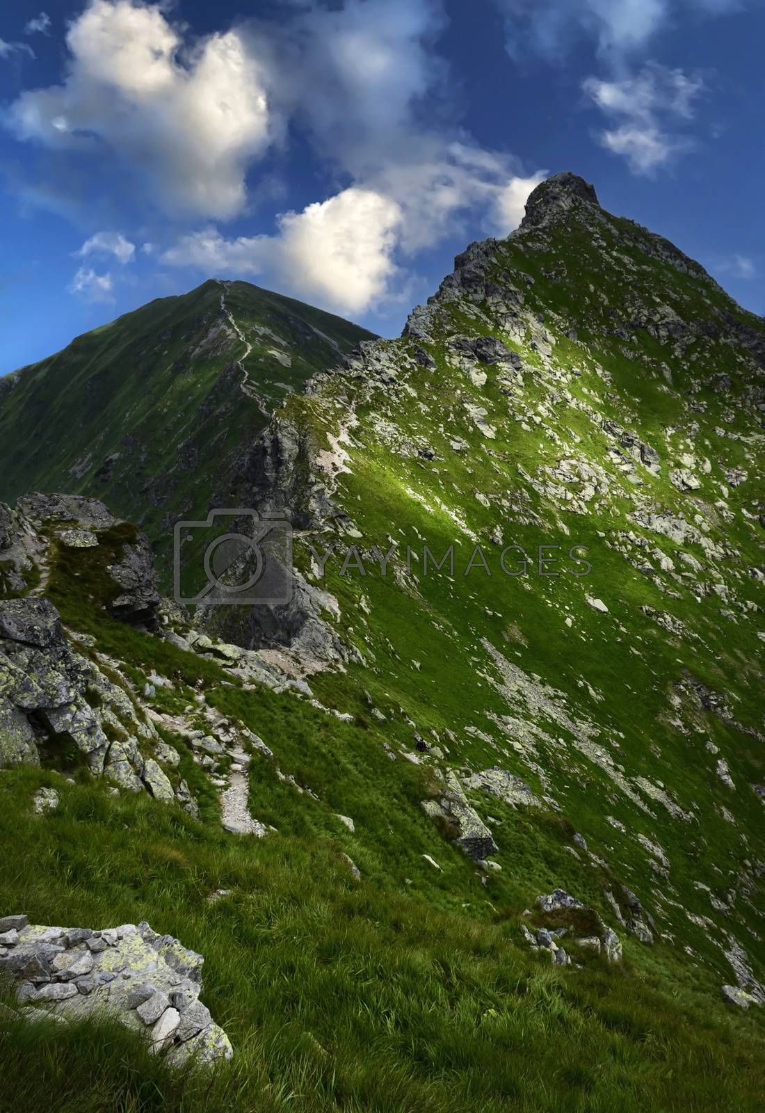 nature landscape background mountain ridge overgrown with green grass