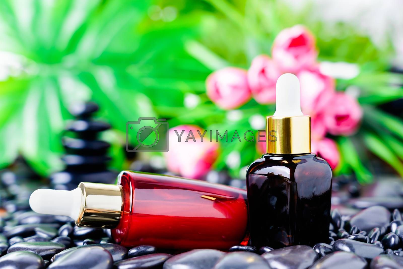 Cosmetic glass bottle for essential oils on black stone against the background of a flowering. Spa still life with natural serums in glass bottle. Dropper bottle mock up