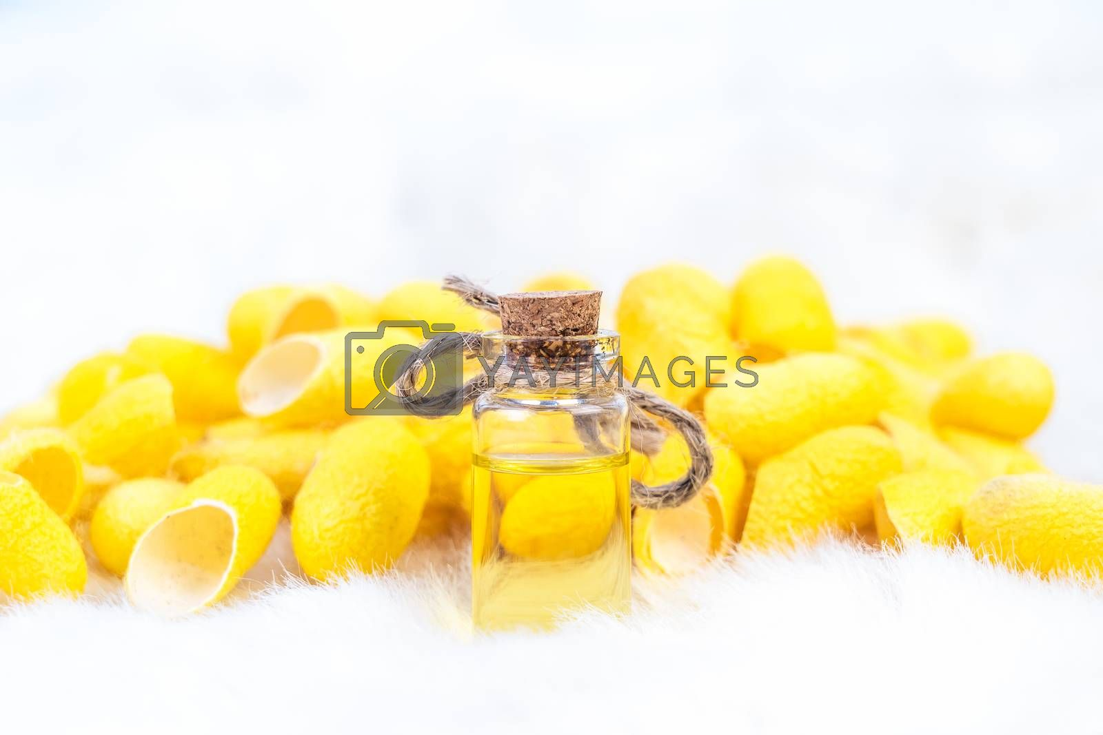 Silkworm cocoon with spa treatment oil on white background