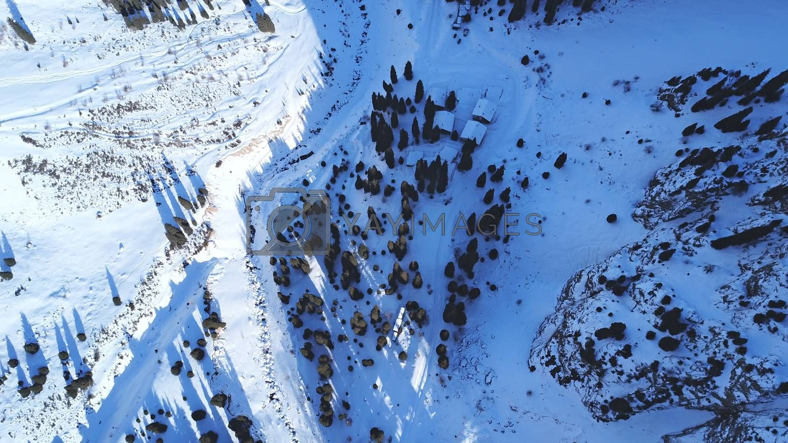Winter gorge, fir trees and a group of people. Ready-made trail through the snow gorge. A group of climbers is walking along it. Top view from a drone. The shadows of the trees fall on the deep snow.