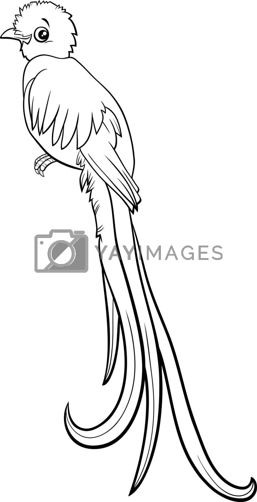 Black and white Cartoon illustration of quetzal bird animal character coloring book page