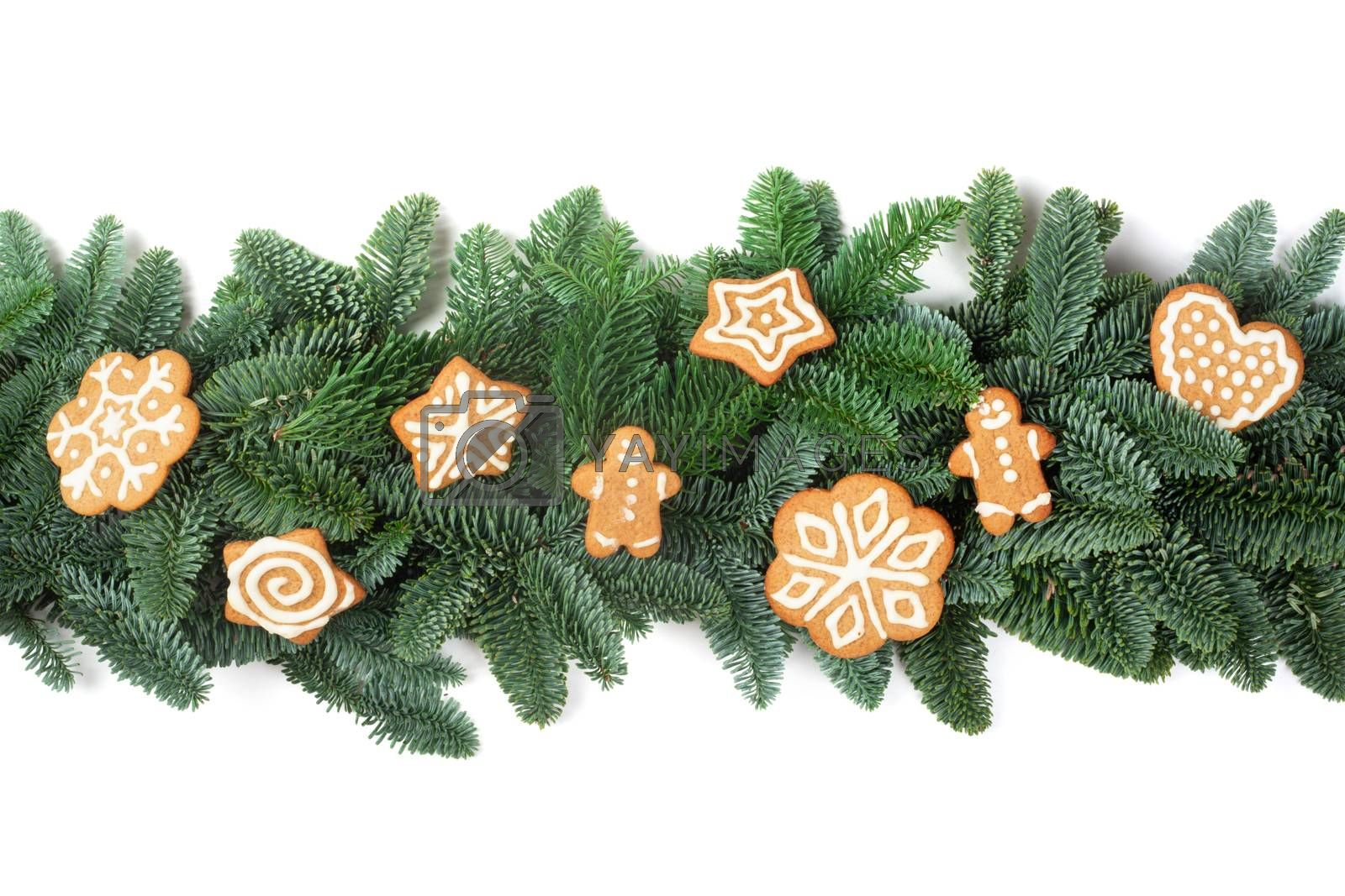 Christmas Border frame of natural noble fir tree branches and gingerbread cookies isolated on white background
