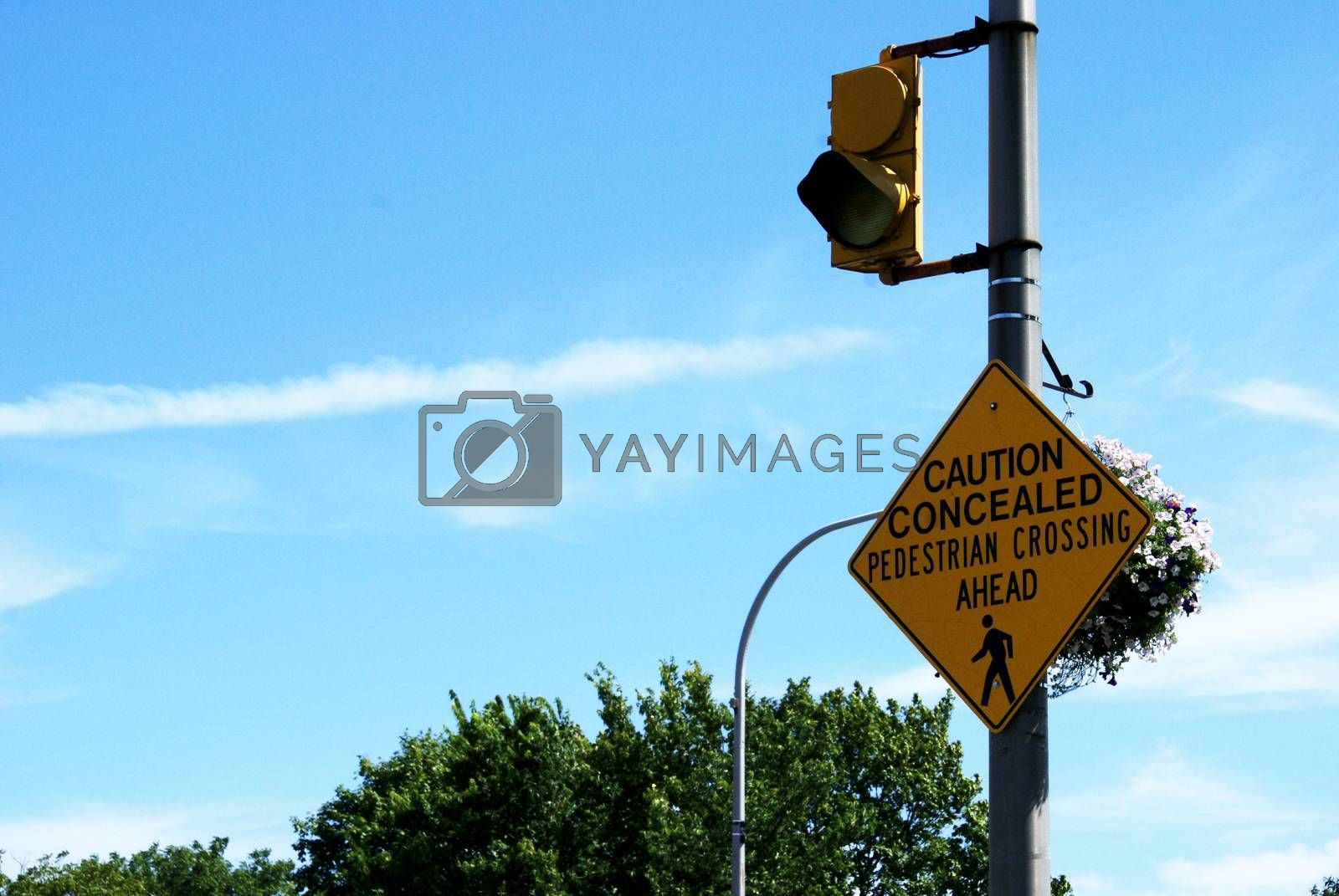 A sign that flashes a yellow warning light to notify drivers of the concealed pedestrian crossing ahead.