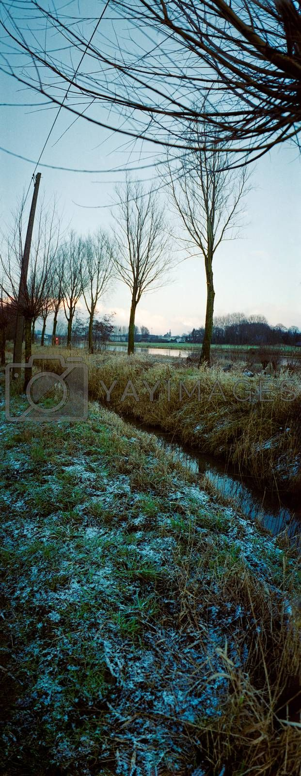 vertical panorama of riverbank with trees in winter in blue light of dawn with a small coverage of snow between the grass