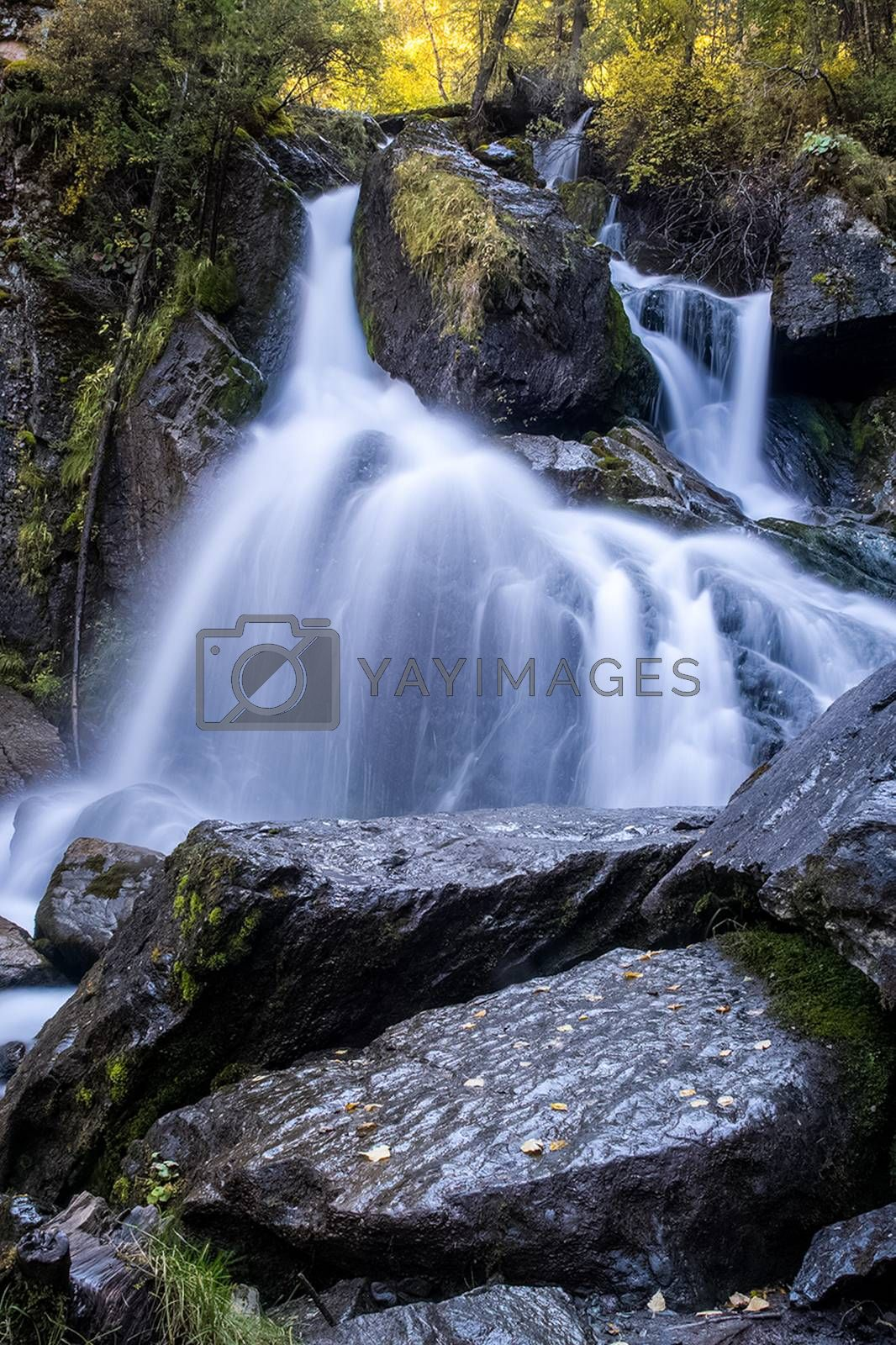 A small waterfall on a mountain river in the Altai. The Altai Mountain Rivers.