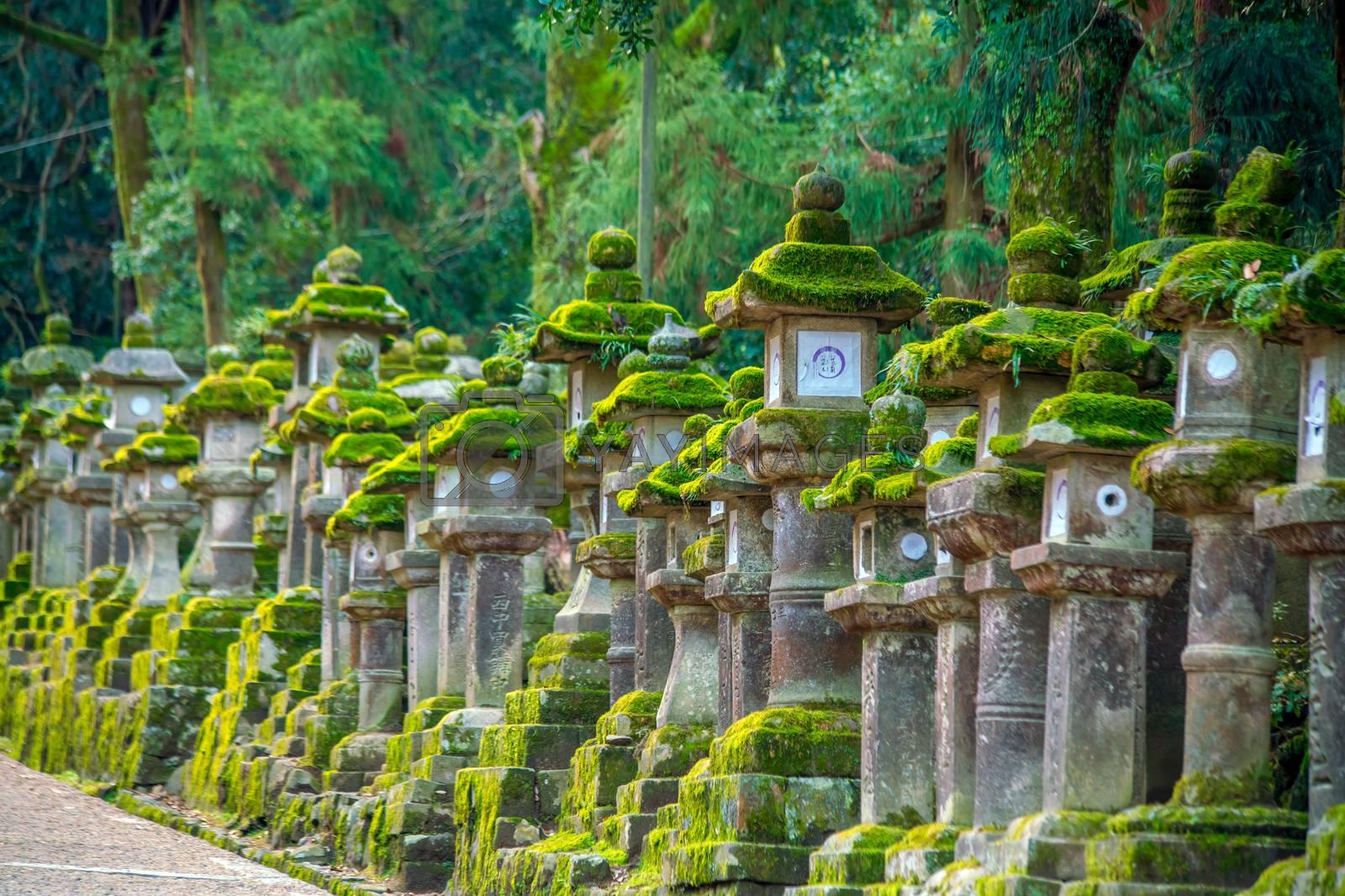 Japanese lanterns at Kasuga-taisha Shrine in Nara Japan