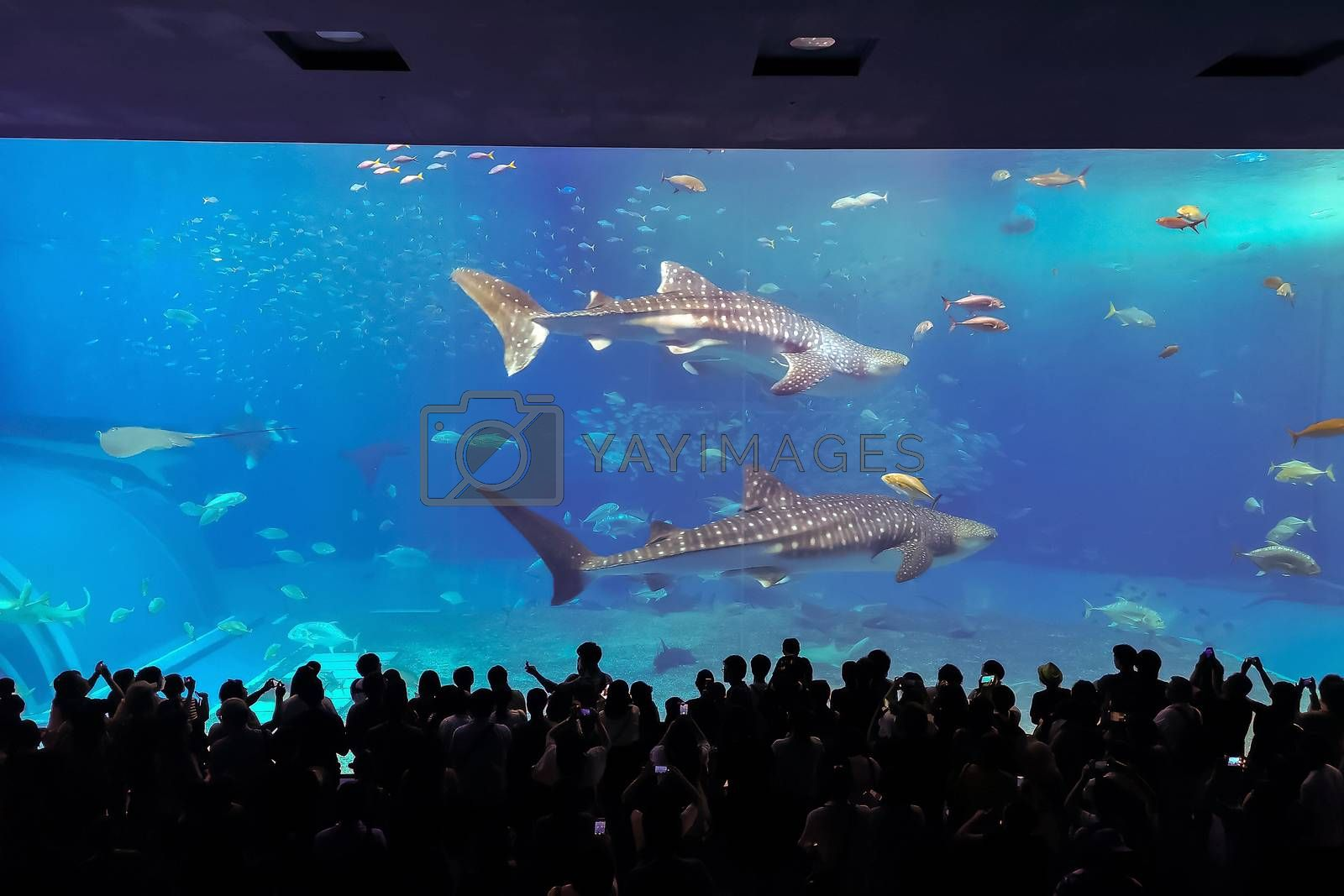 Silhouettes of people with whale shark  in Oceanarium