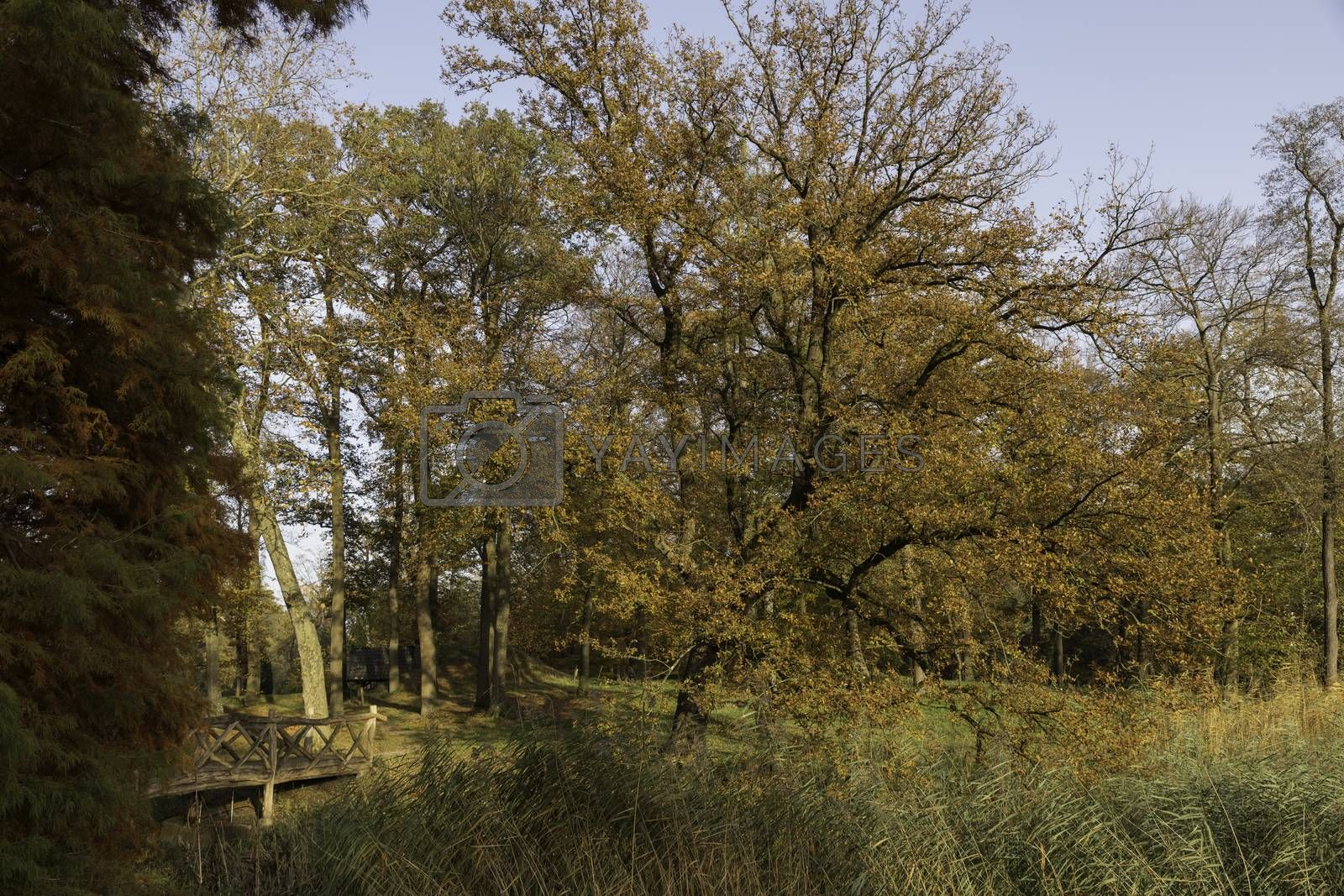 autum forest with red brown and golden colors in national park de veluwe in holland