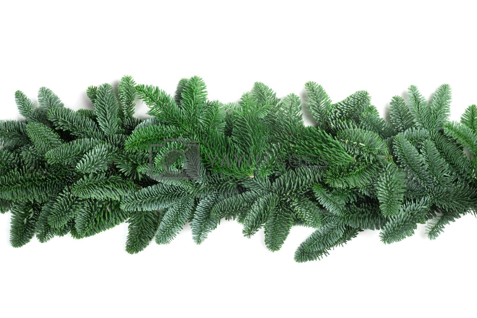 Christmas Border frame of natural noble fir tree branches isolated on white background