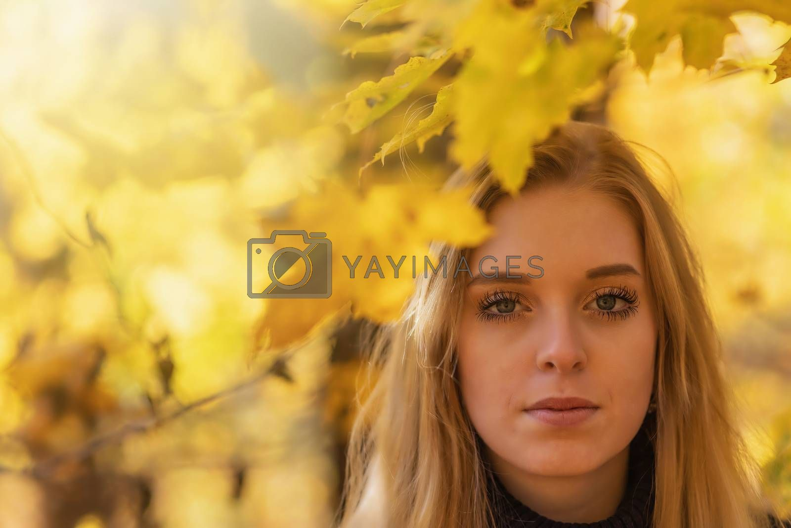 Portrait of attractive girl under yellow maple leaves closeup. The girl is looking at the camera.