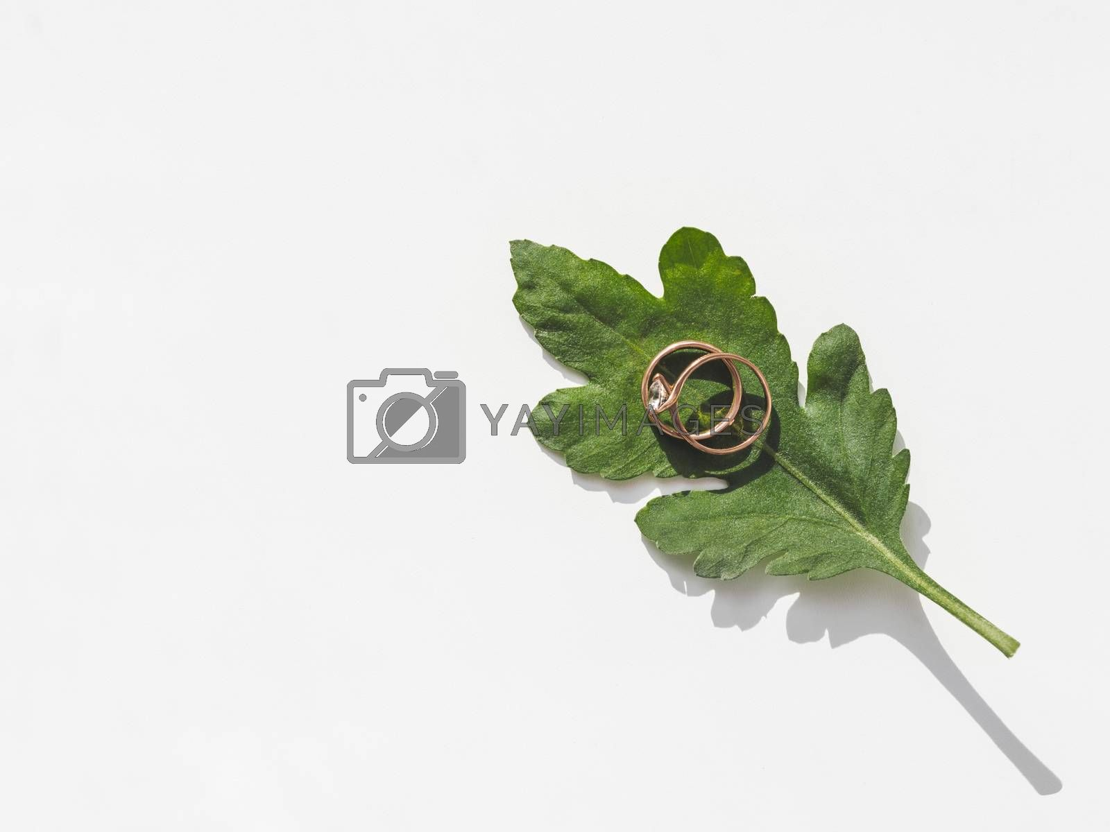 Top view on two wedding rings on green leaf. Plant with traditional jewelry accessories with laces napkin. White background with copy space.