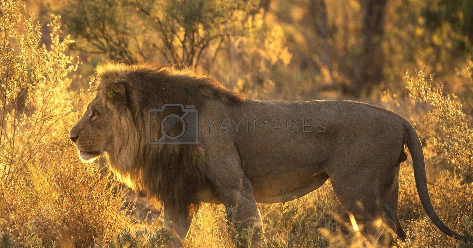 Royalty free image of Beautiful pictures of Wildlife by TravelSync27