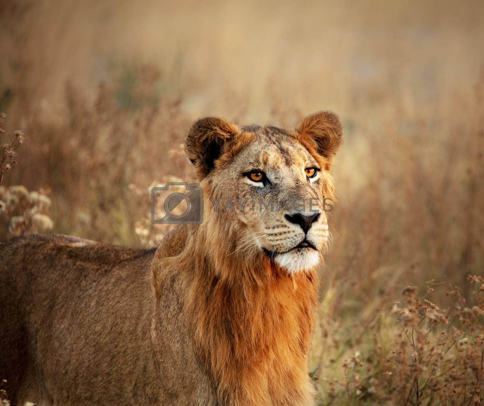 Beautiful pictures of Wildlife