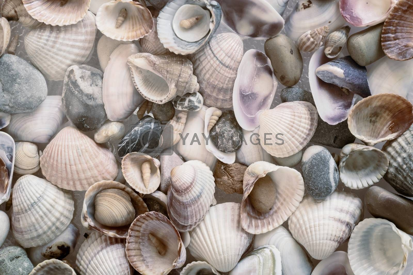 Small seashells of various shapes and colors along with sea pebbles. Background image, nature concept. Presented in close-up.