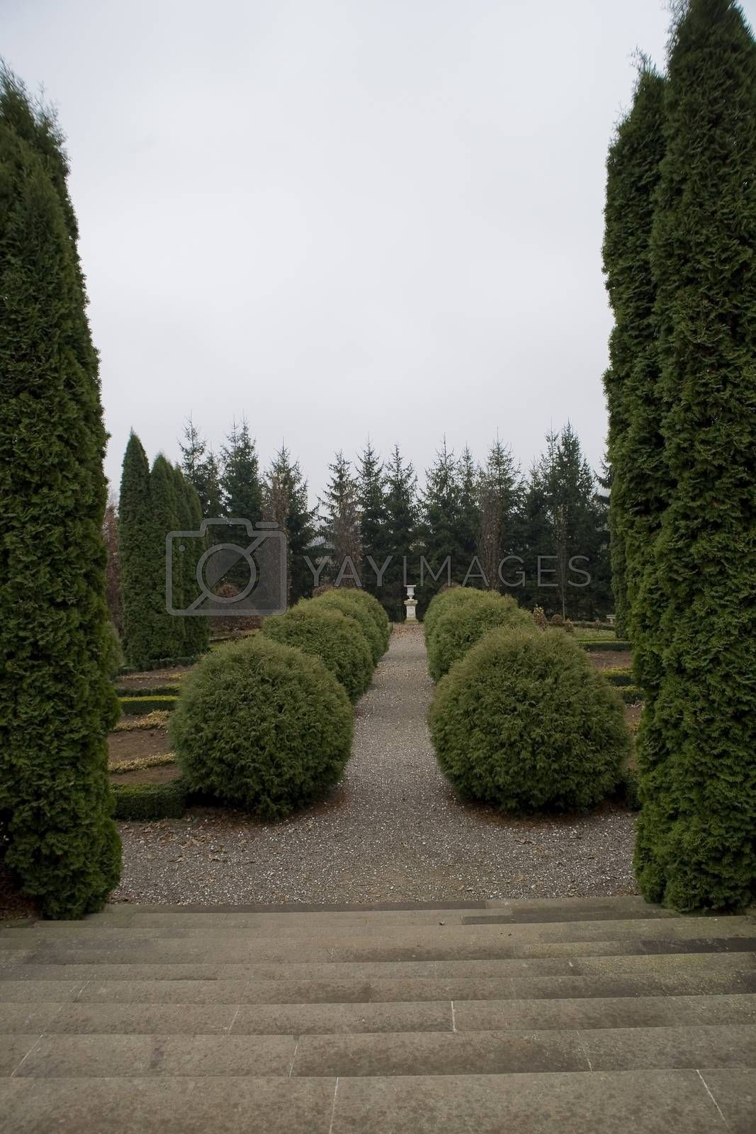 Royalty free image of historic park with a path among ornamental evergreen shrubs on a by Lukrecja