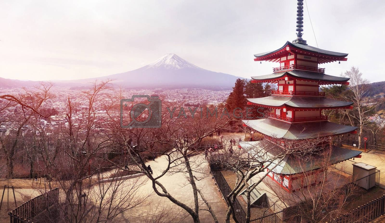 Panoramic view of Red Chureito Pagoda and Snow covered Mount Fuji  in Shimoyoshida - Arakurayama Sengen Park in Fujiyoshida near Kawaguchigo