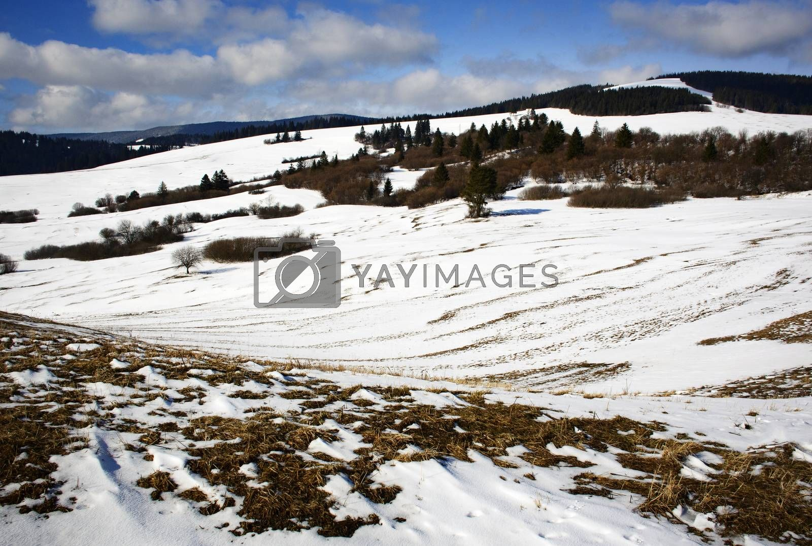 nature seasonal spring landscape with melting snow