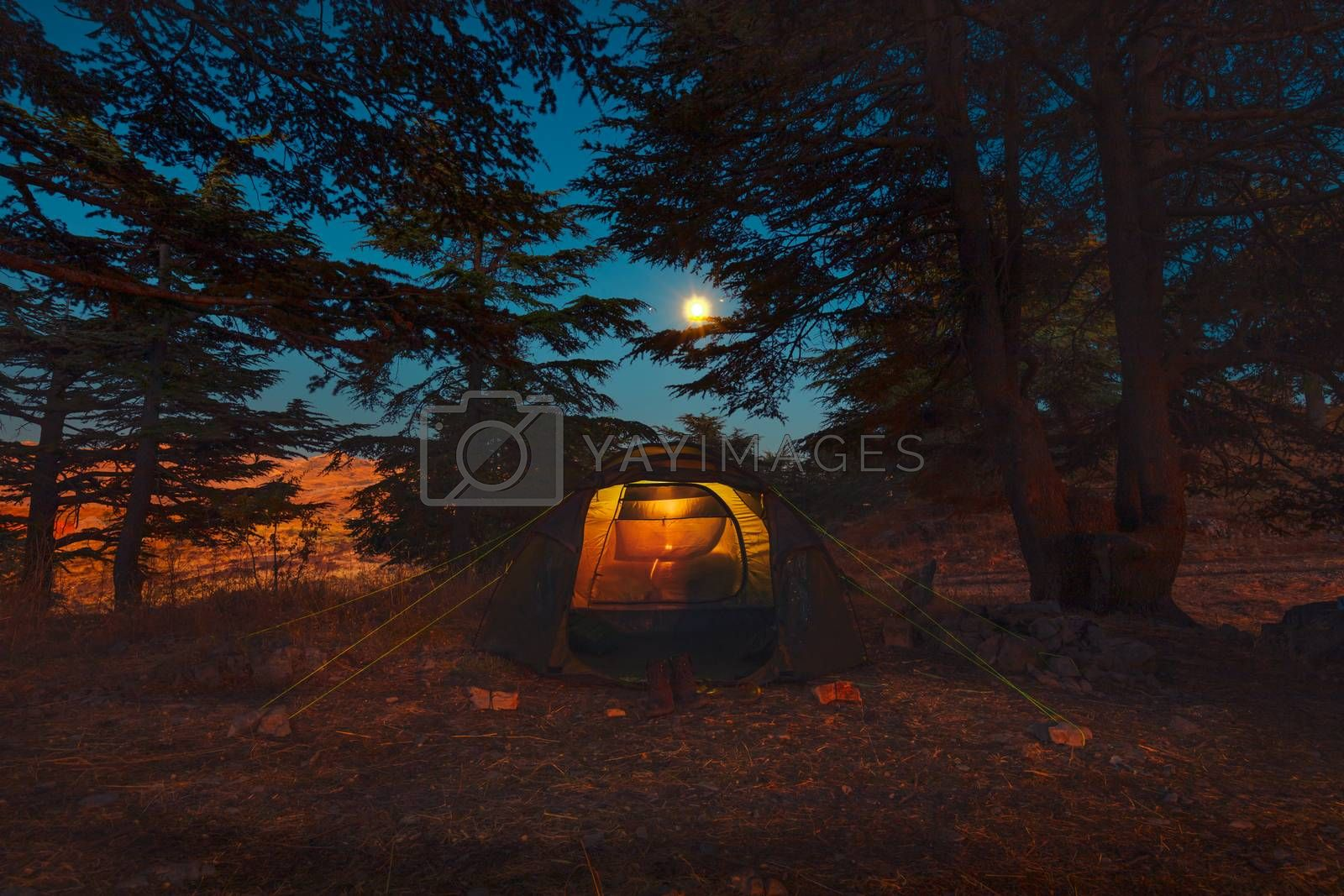 Beautiful Night View on a Tent among Cedar Forest in the Mountains. Enjoying Autumn Moonlight in the Camping. Peace and Relaxation Concept. Lebanon