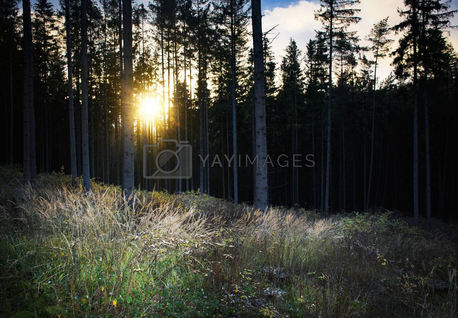 seasonal nature background early evening in the autumn forest