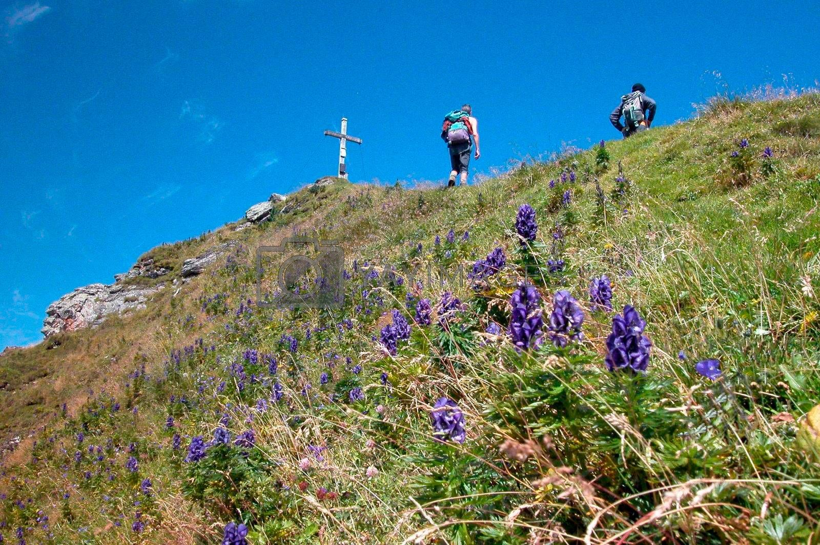 hiking at the mountain top in the alps, sports and outdoor activity