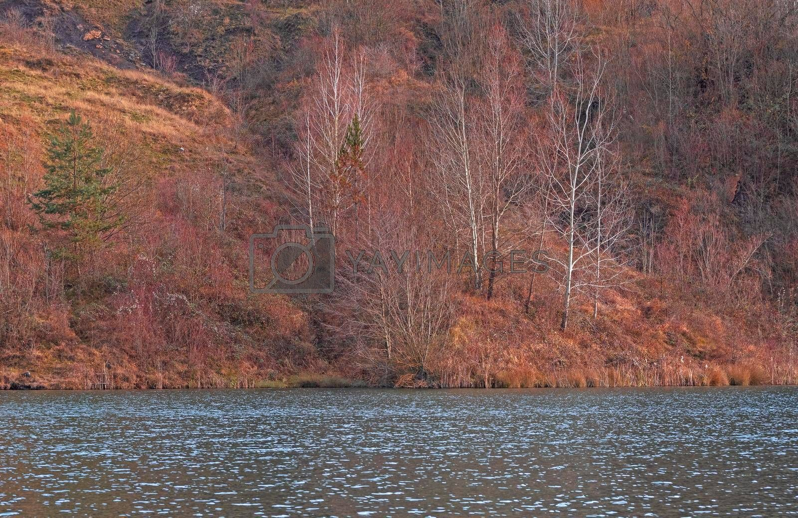 A coal lake and a colorful forest
