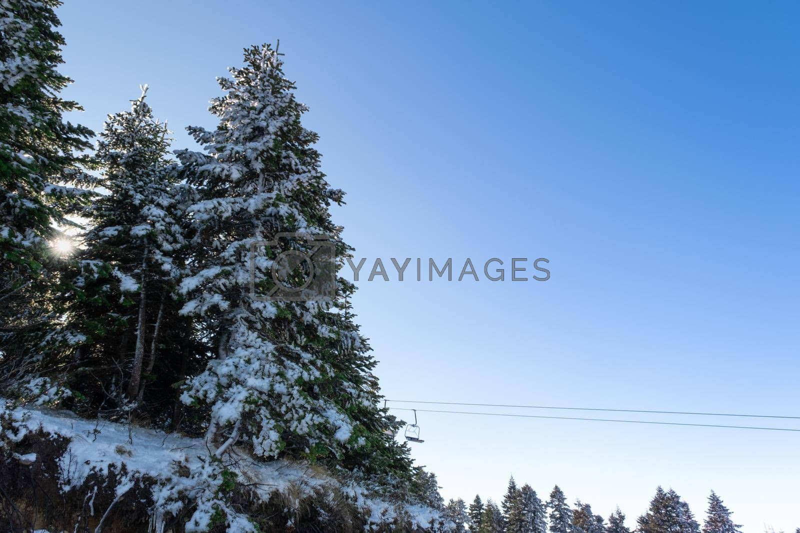 It depicts a landscape in forest in Christmas time in Winter and snow falling on pine trees