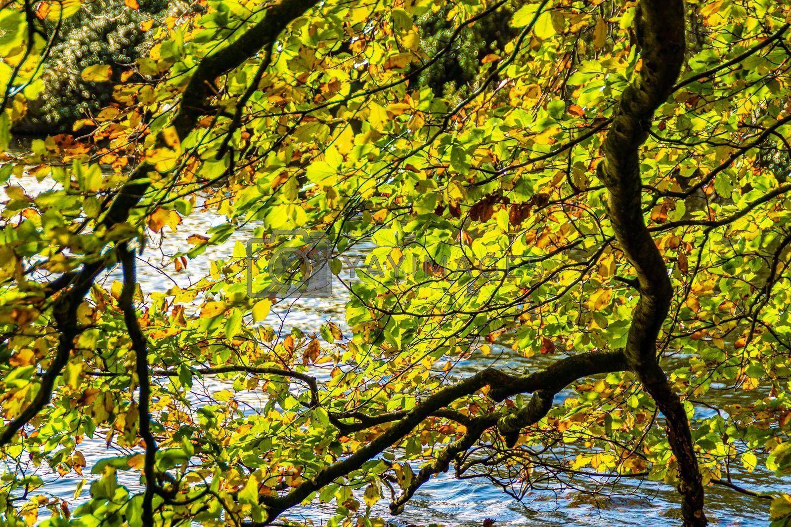 Close image of branched from a tree near  the shore of a lake, hanging over the water.
