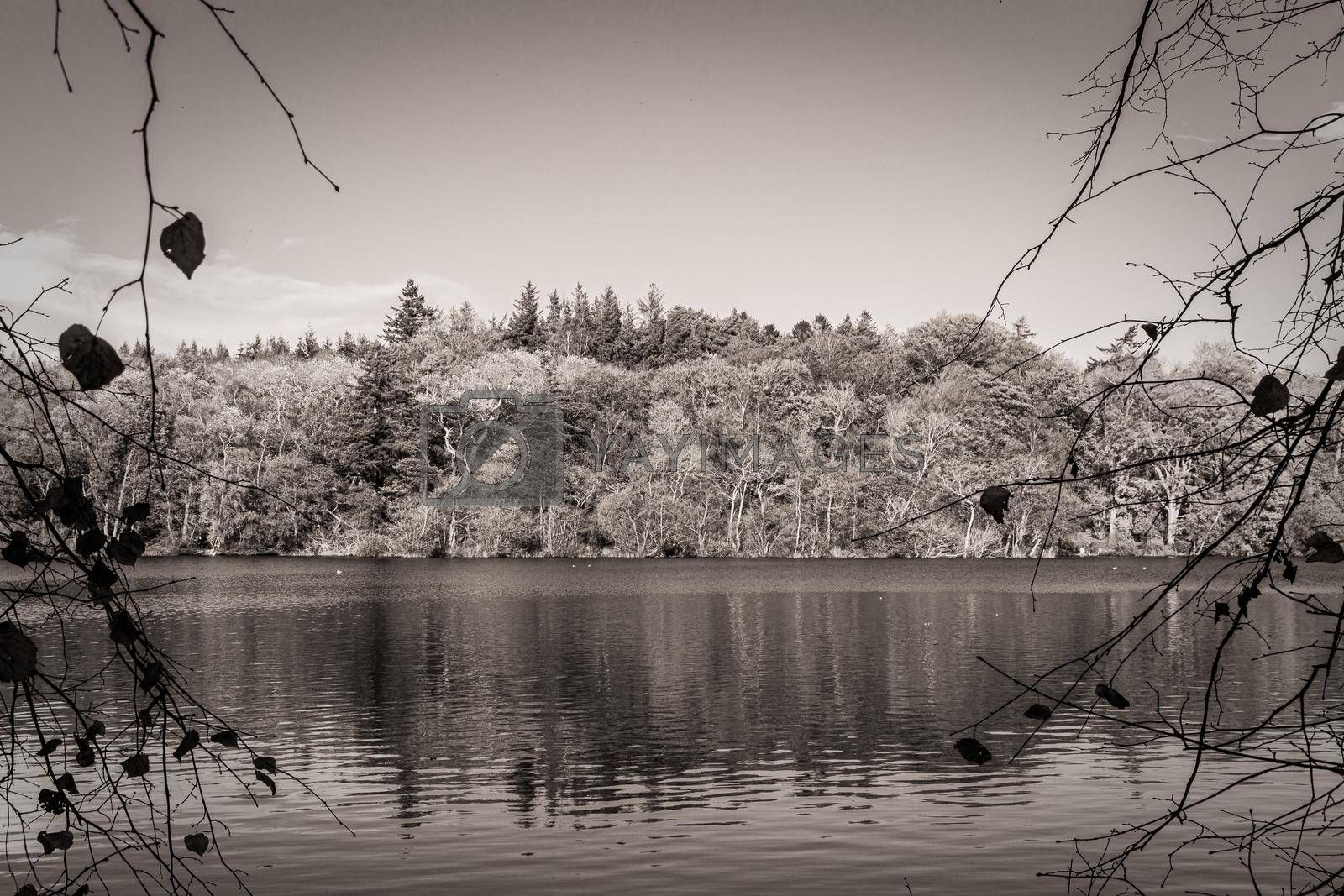 A monochrome view of the side of a lake, with the trees and vegetation reflected in the water. There is a mostly cloudless sky, an some nearby branches in silhouette framing the sides of the image.