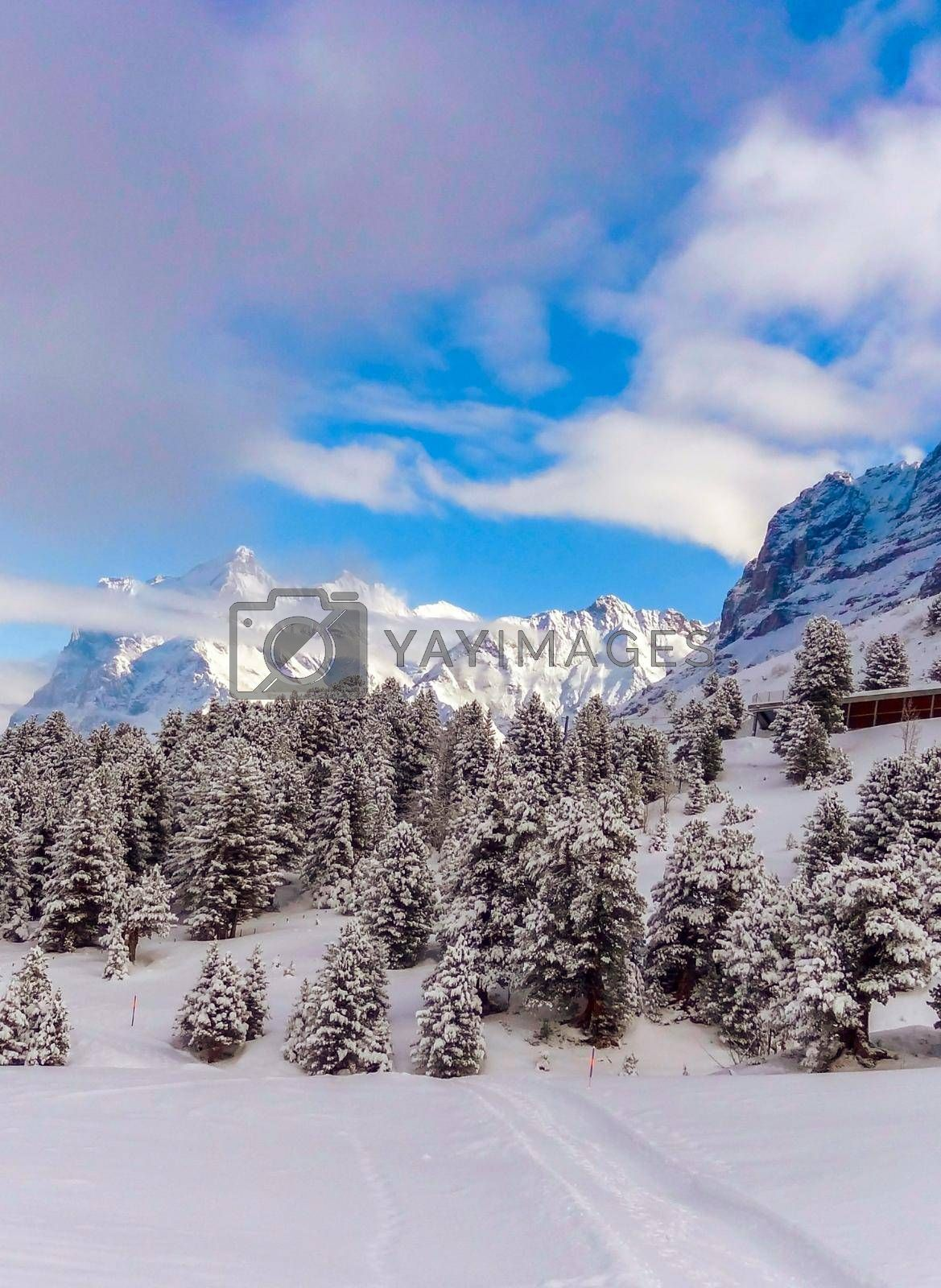 Beautiful winter mountain landscape in Sunny weather with views of Wetterhorn 3692m mountain peak. Grindelwald, Bernese Oberland Switzerland.