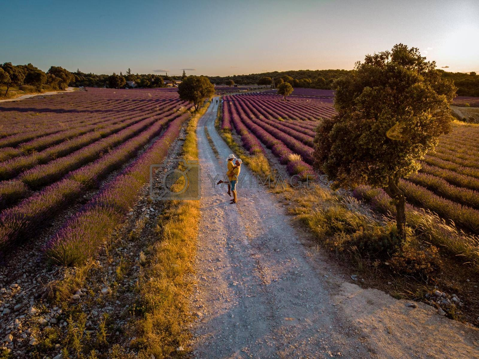 Lavender fields in Ardeche in southeast France. Drone aerial view