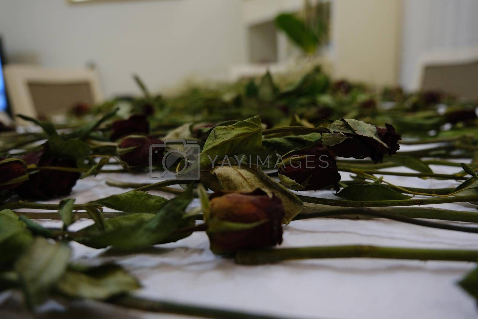It depicts some faded withered roses on the table