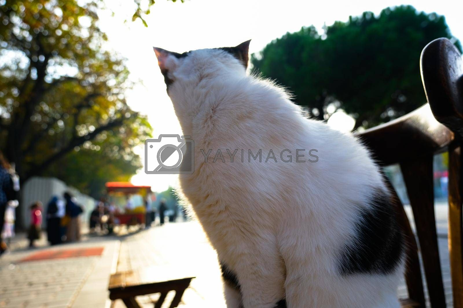 It depicts a white cat checking around