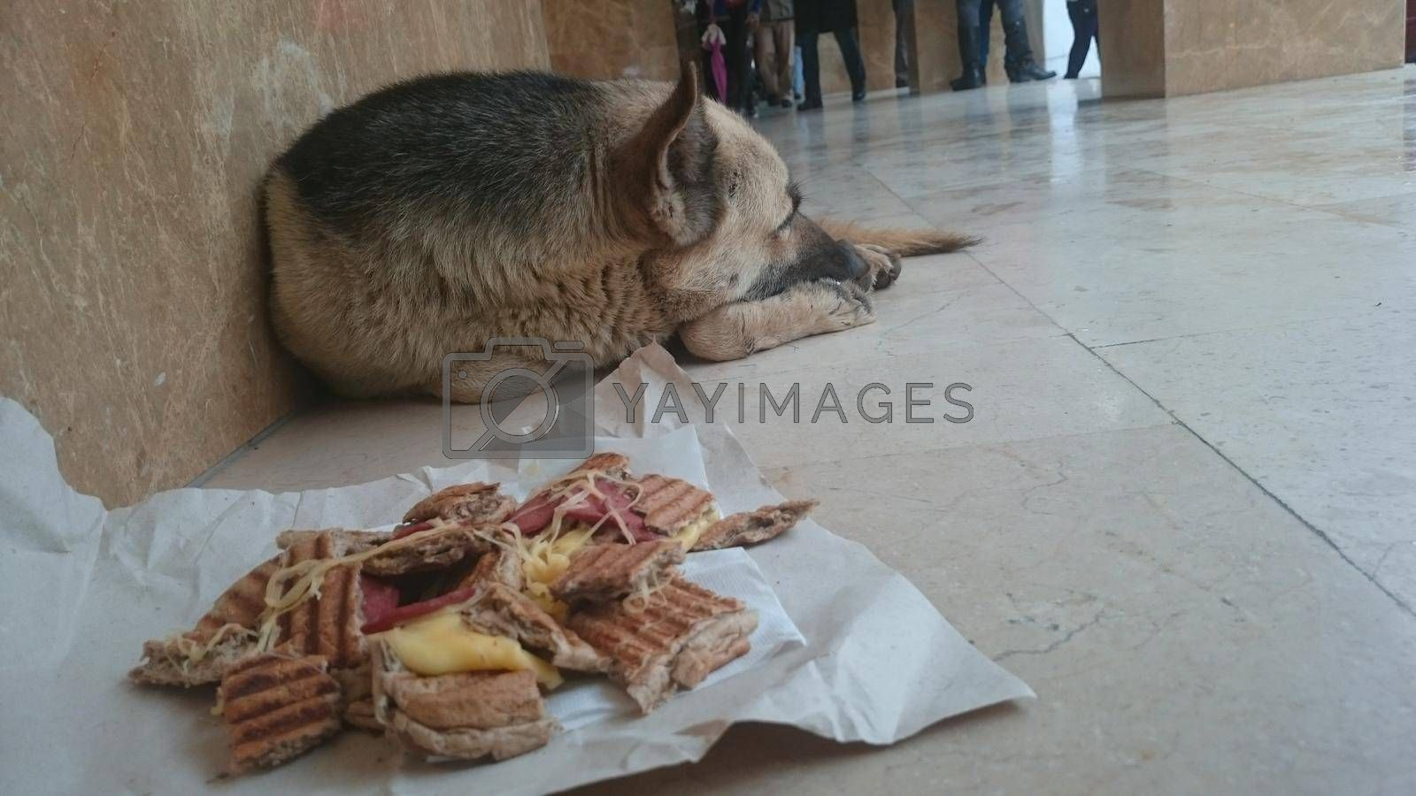 It depicts a dog sleeping on the ground