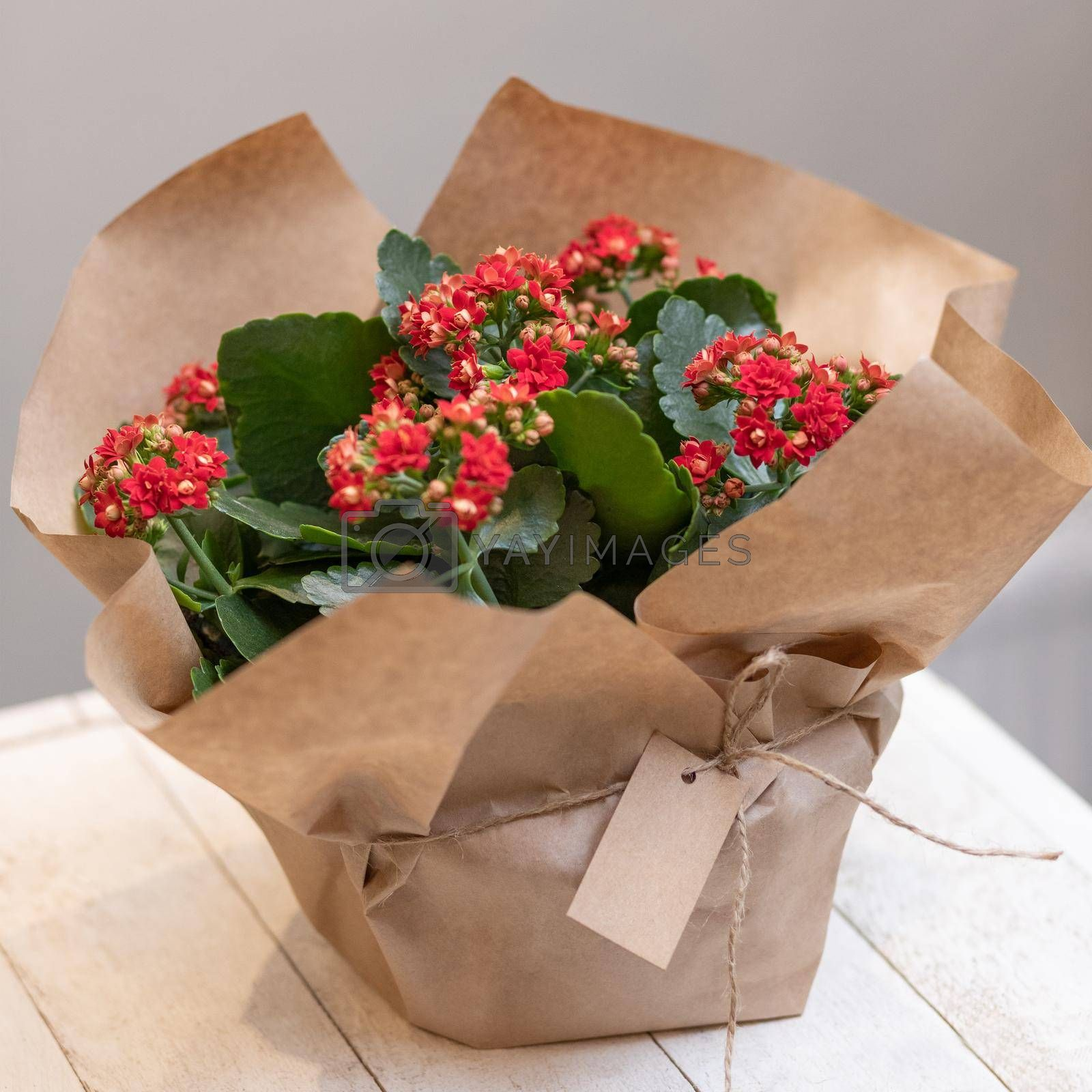Colorful Widow's-thrill, Kalanchoe flowers in the paper bouquet