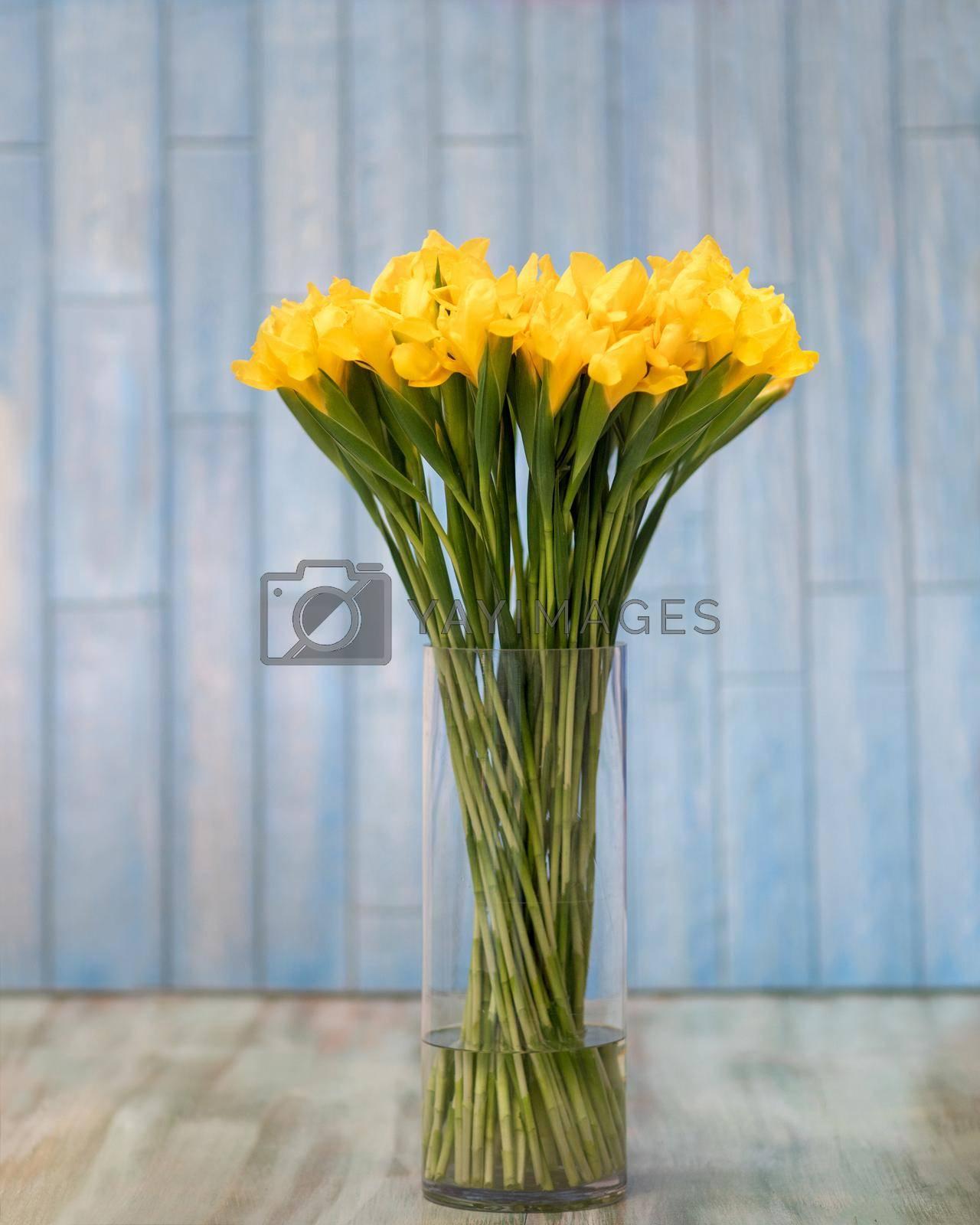 Yellow Dutch Iris Golden Beauty flower